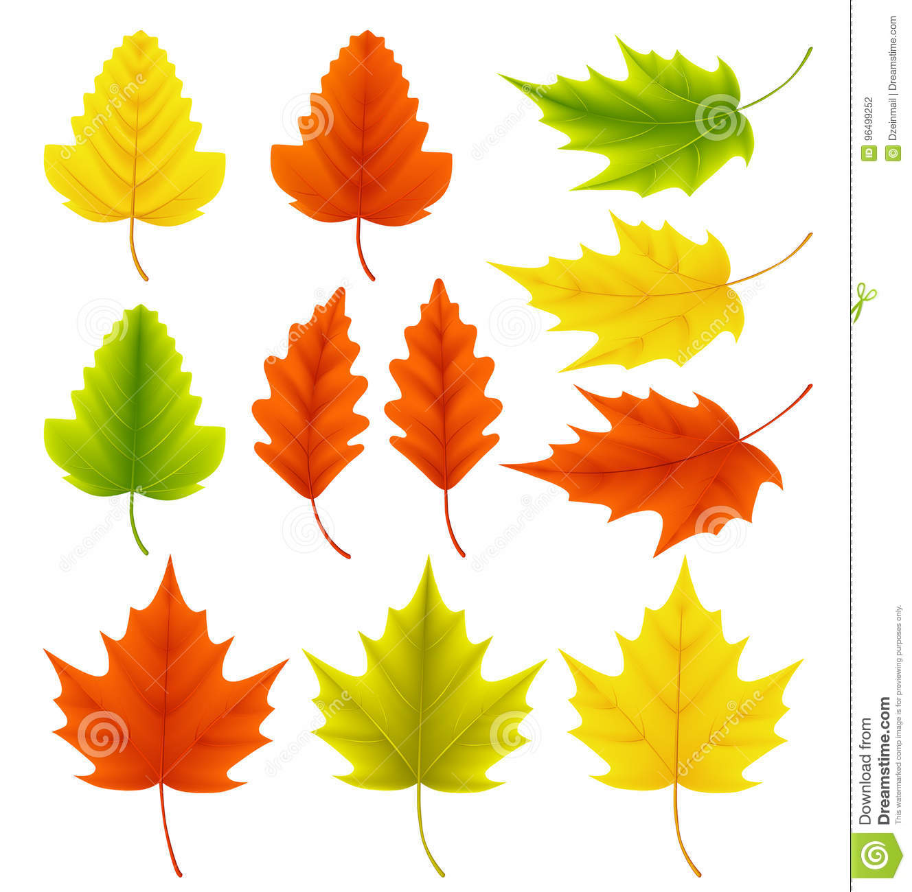 Fall leaves vector collection. Set of autumn leaves like maple and oak