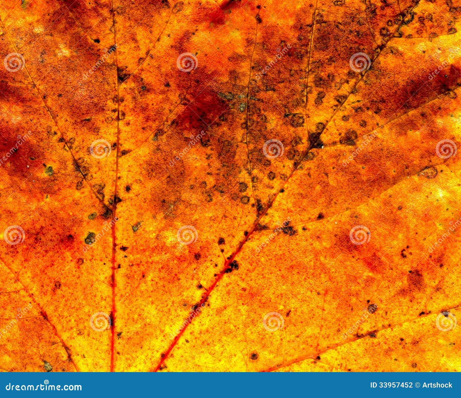 Fall maple leaf texture