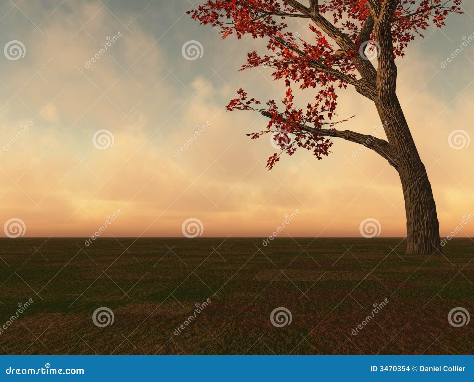 Fall Maple Tree On Horizon Stock Images Image 3470354