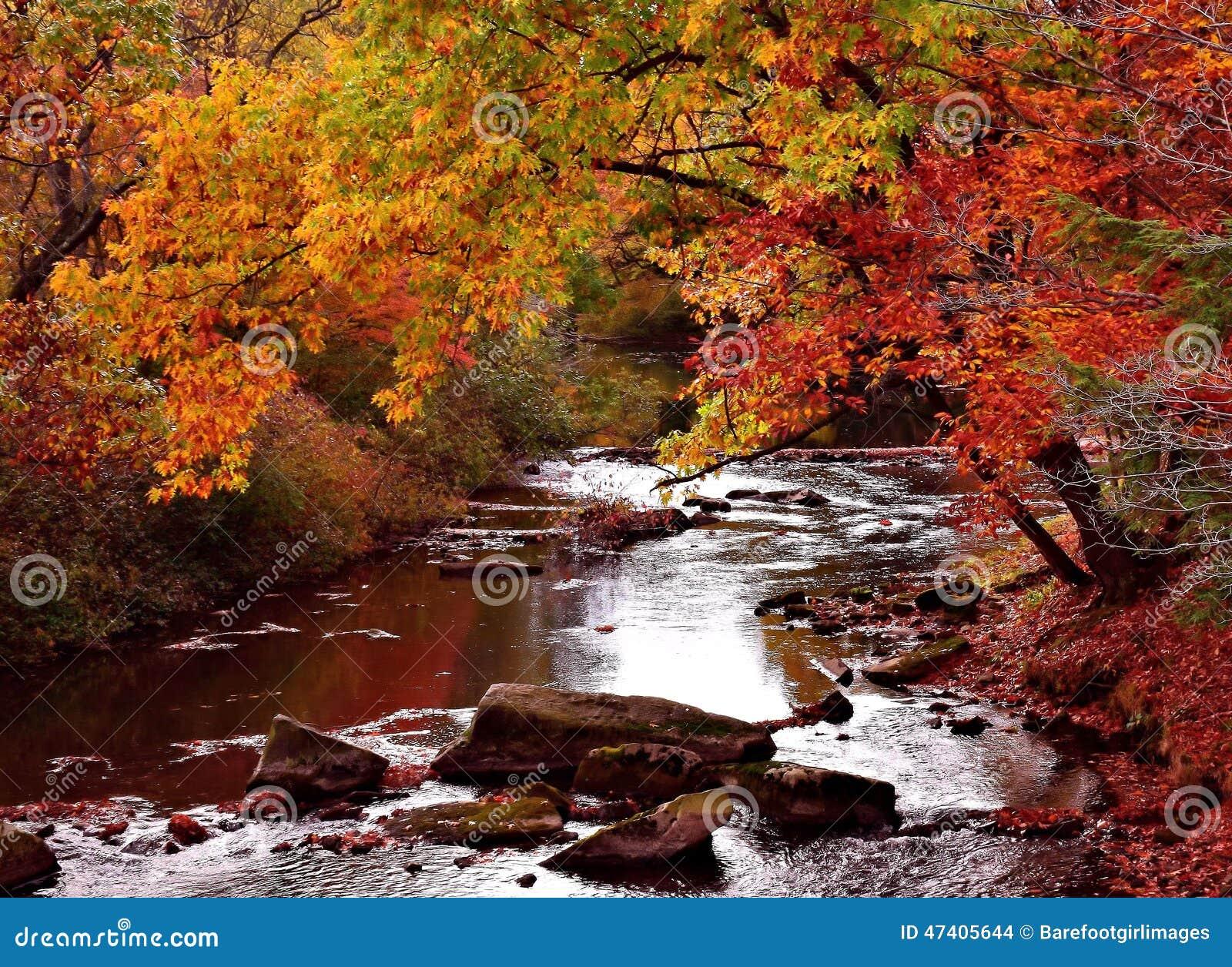 fall mountain stream stock photo image of nature tree 47405644
