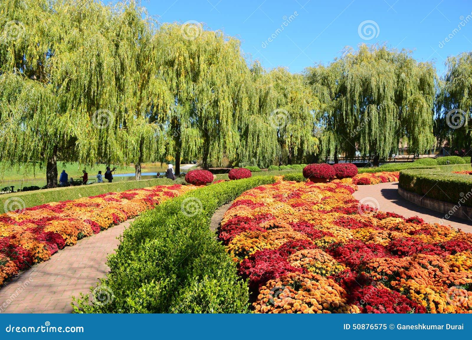 Fall mums at chicago botanic garden stock photo image - Botanic meubles de jardin ...
