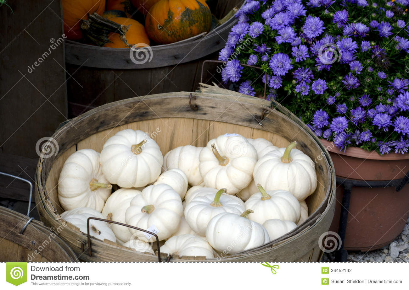 Fall Mums And White Pumpkins Stock Photo Image Of Gourds