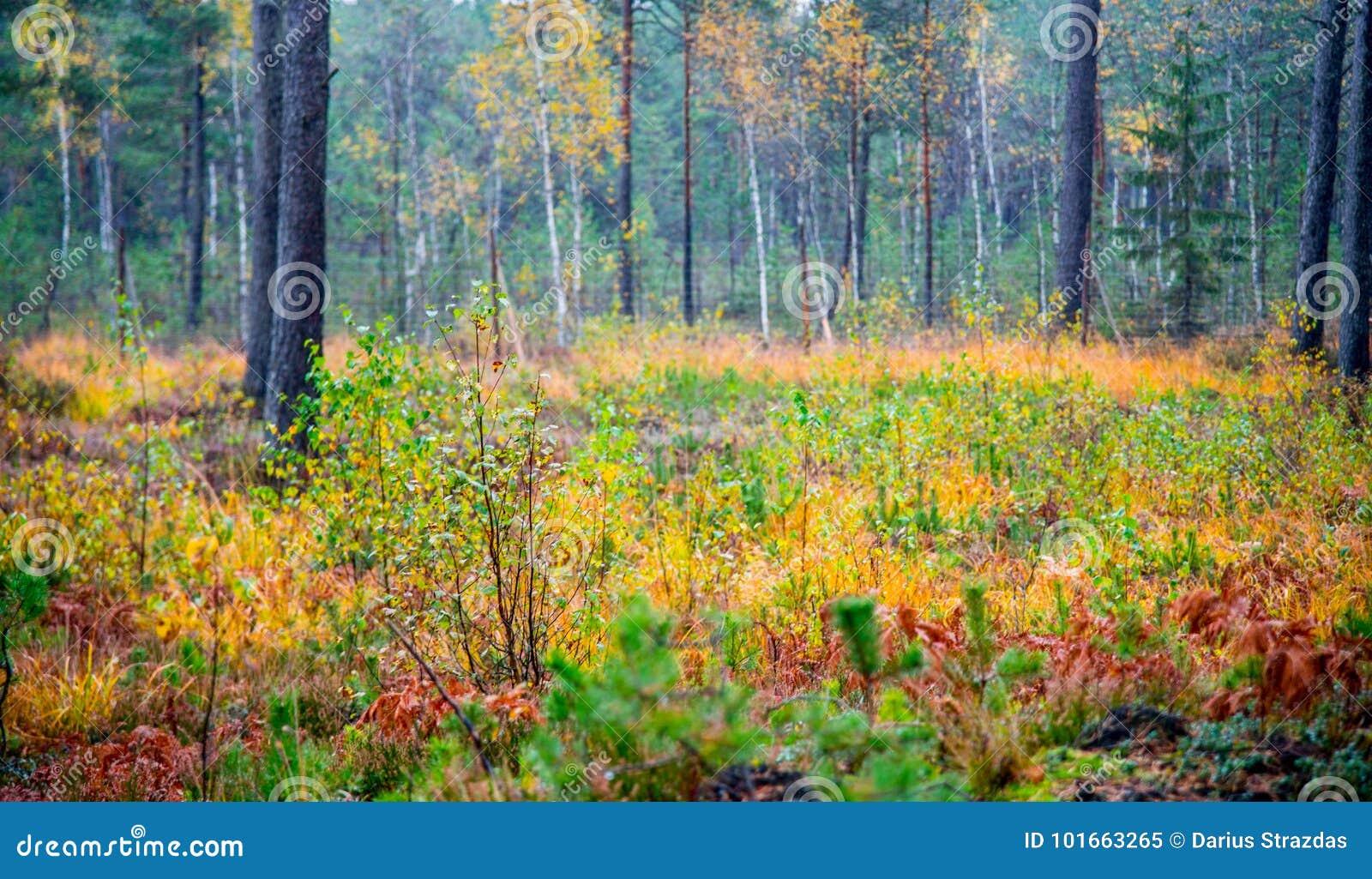 Fall nature colors stock image. Image of lithuania, fall - 101663265