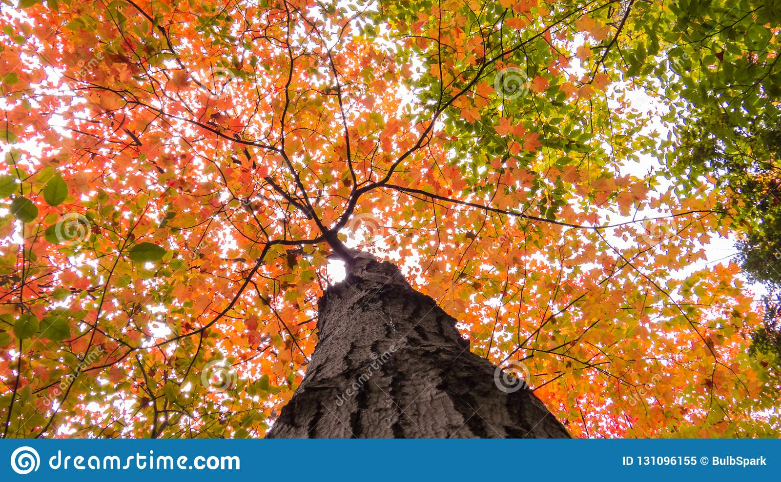 Orange And Green Leaves Of Many Treetops Stock Image - Image of