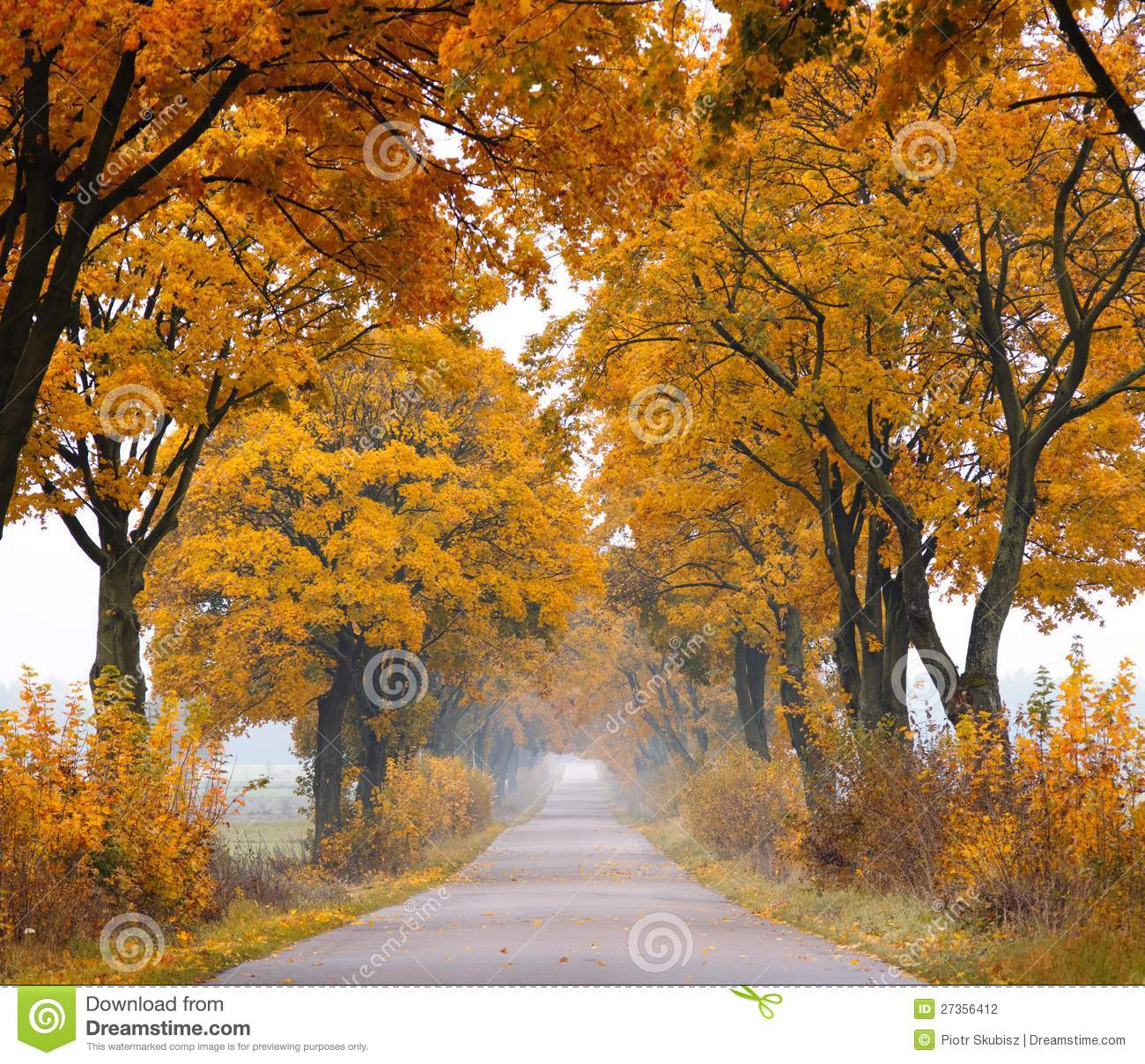 Download Fall road. stock photo. Image of country, roadway, mystery - 27356412