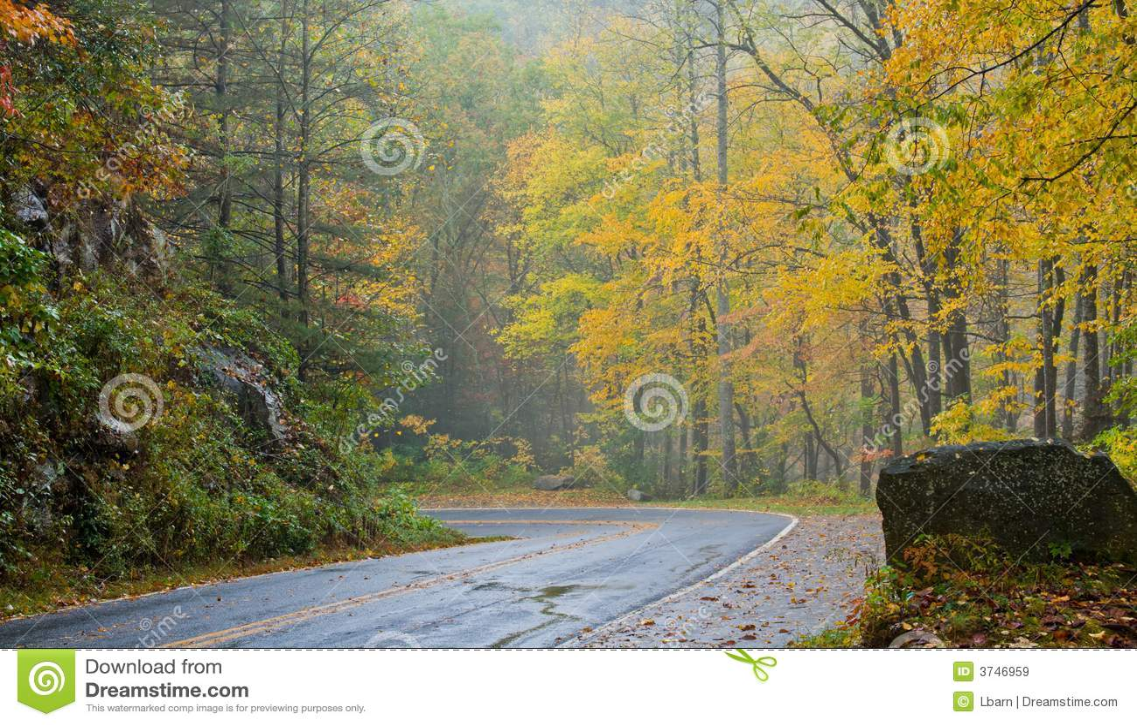 Fall roadside scenic yellow