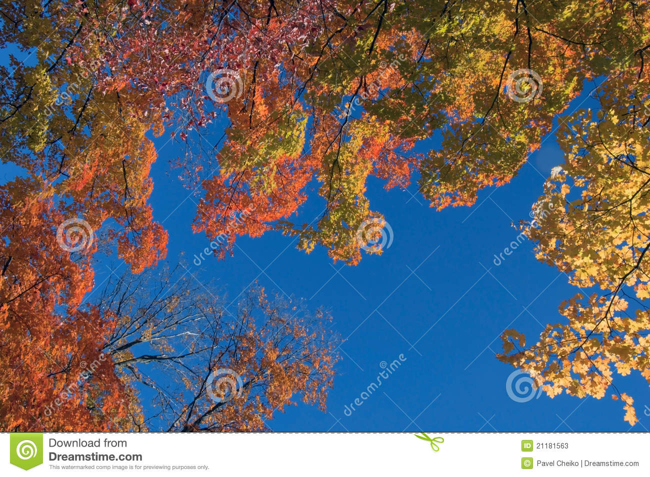 Fall s colorful tree