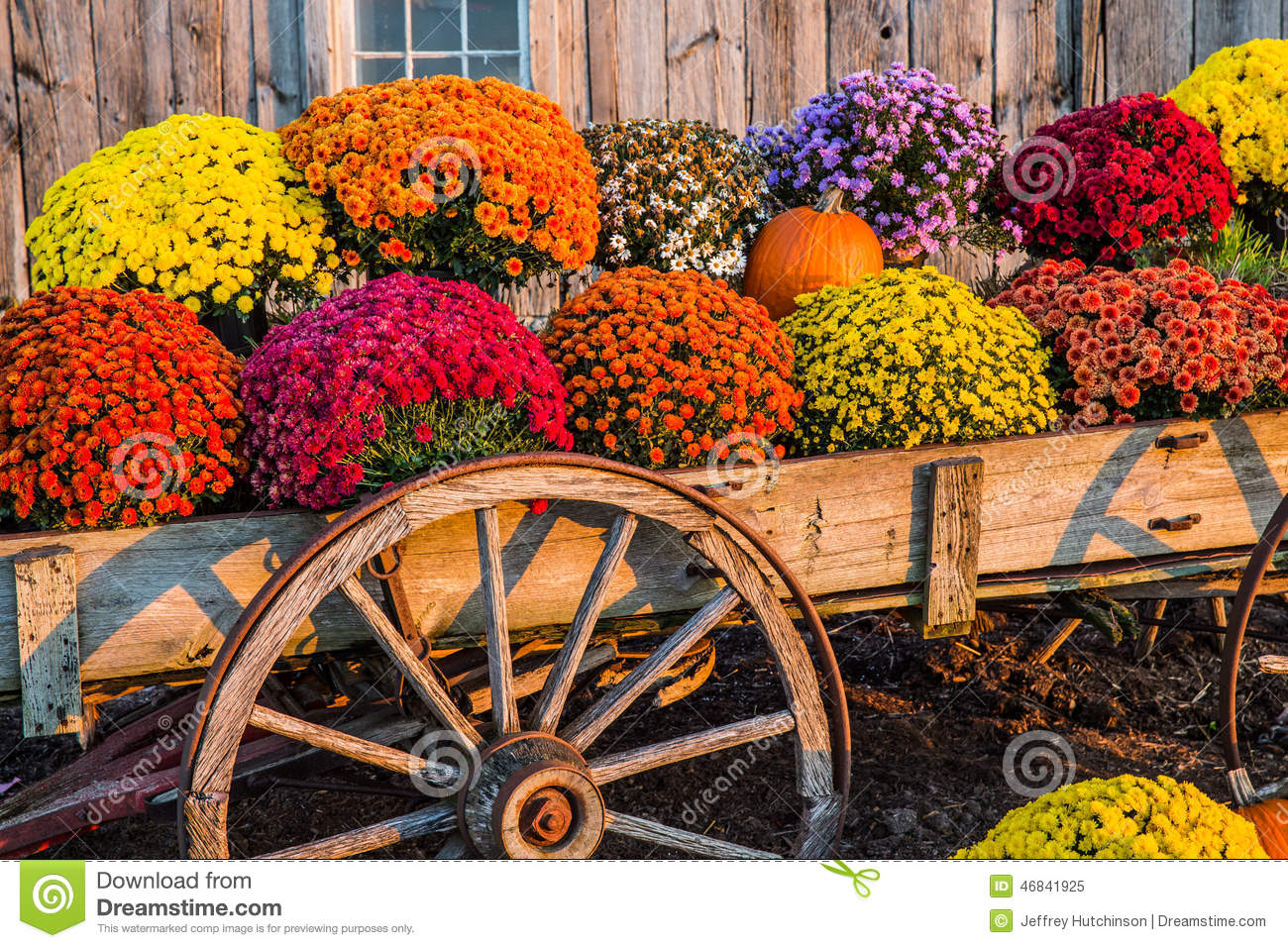 Fall Scene Stock Image Image Of Vegetables Scene Colors