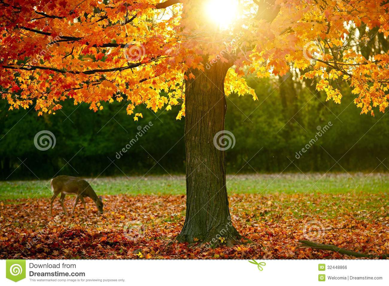 Fall Season In The Park Royalty Free Stock Image Image