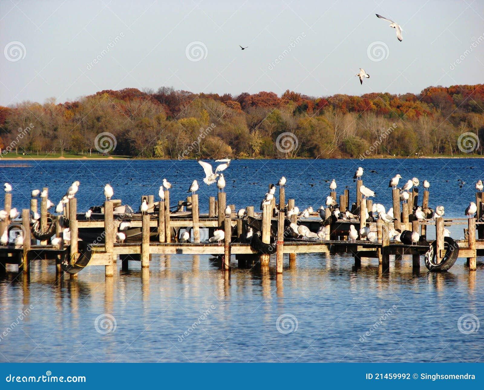 Fall Season and seagulls in Wisconsin