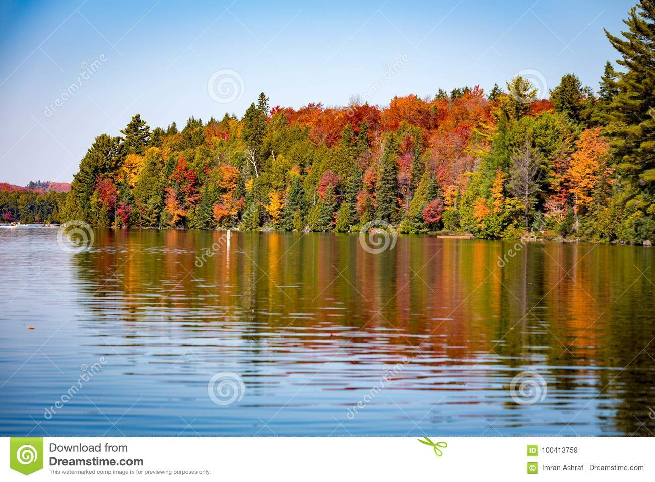 Fall trees with lake