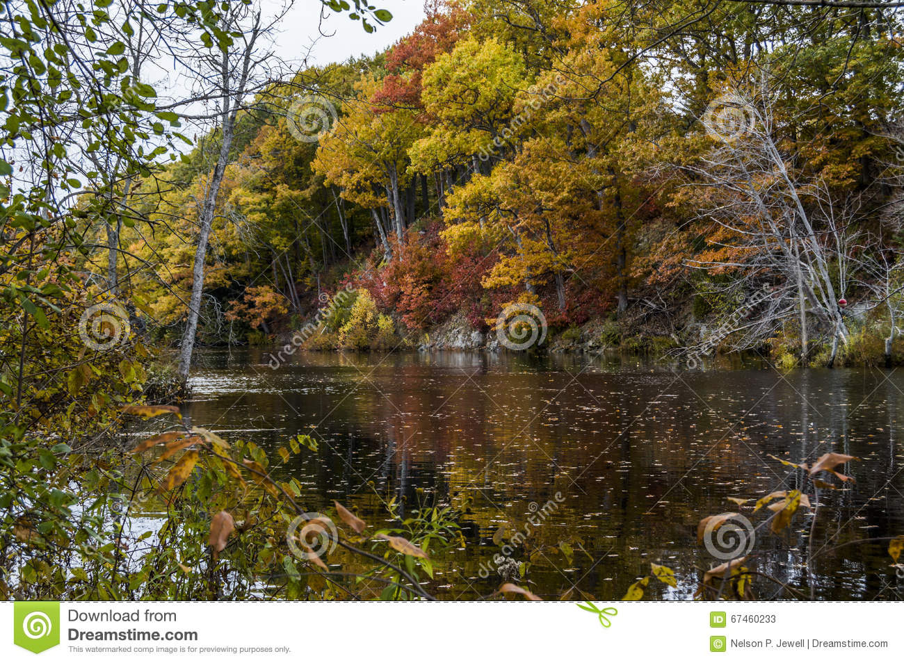 Fall Trees Show Splendor Over River Stock Image - Image of ...