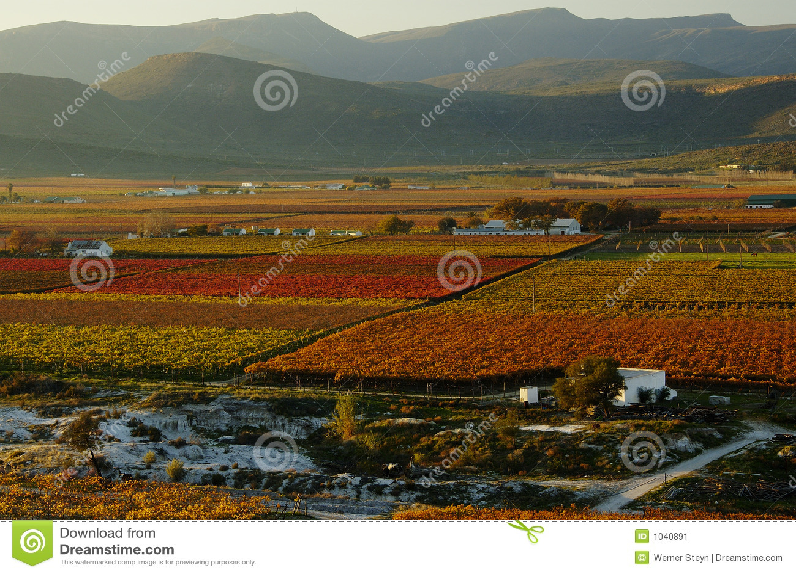Fall Vineyards22