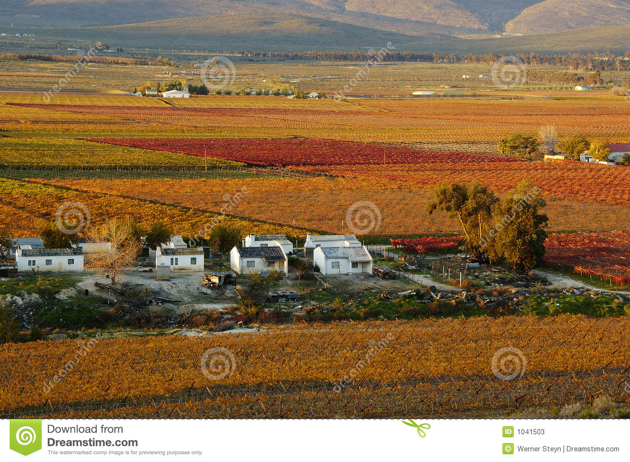 Fall Vineyards30