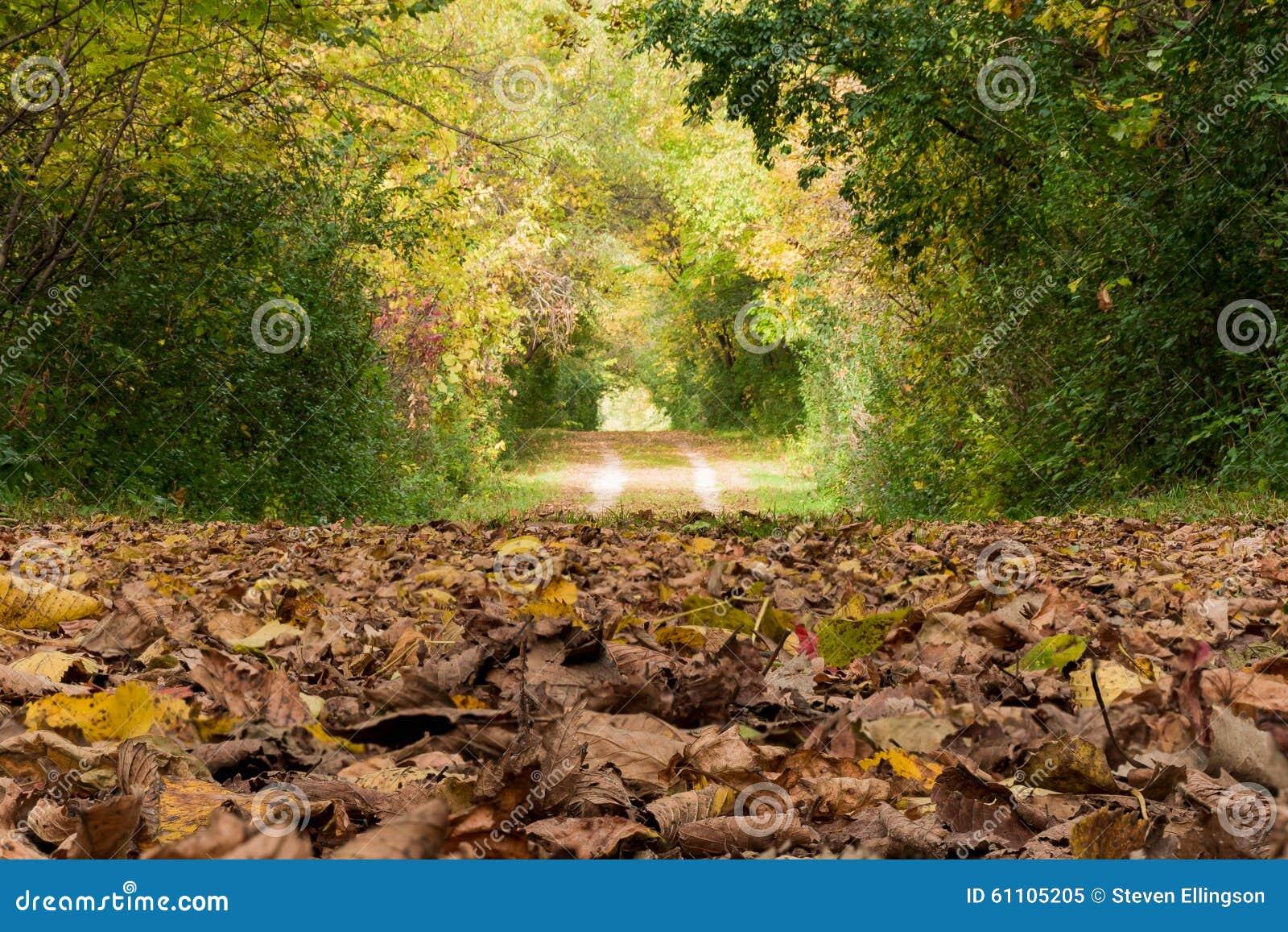 Fall-Weg bedeckt in den Blättern