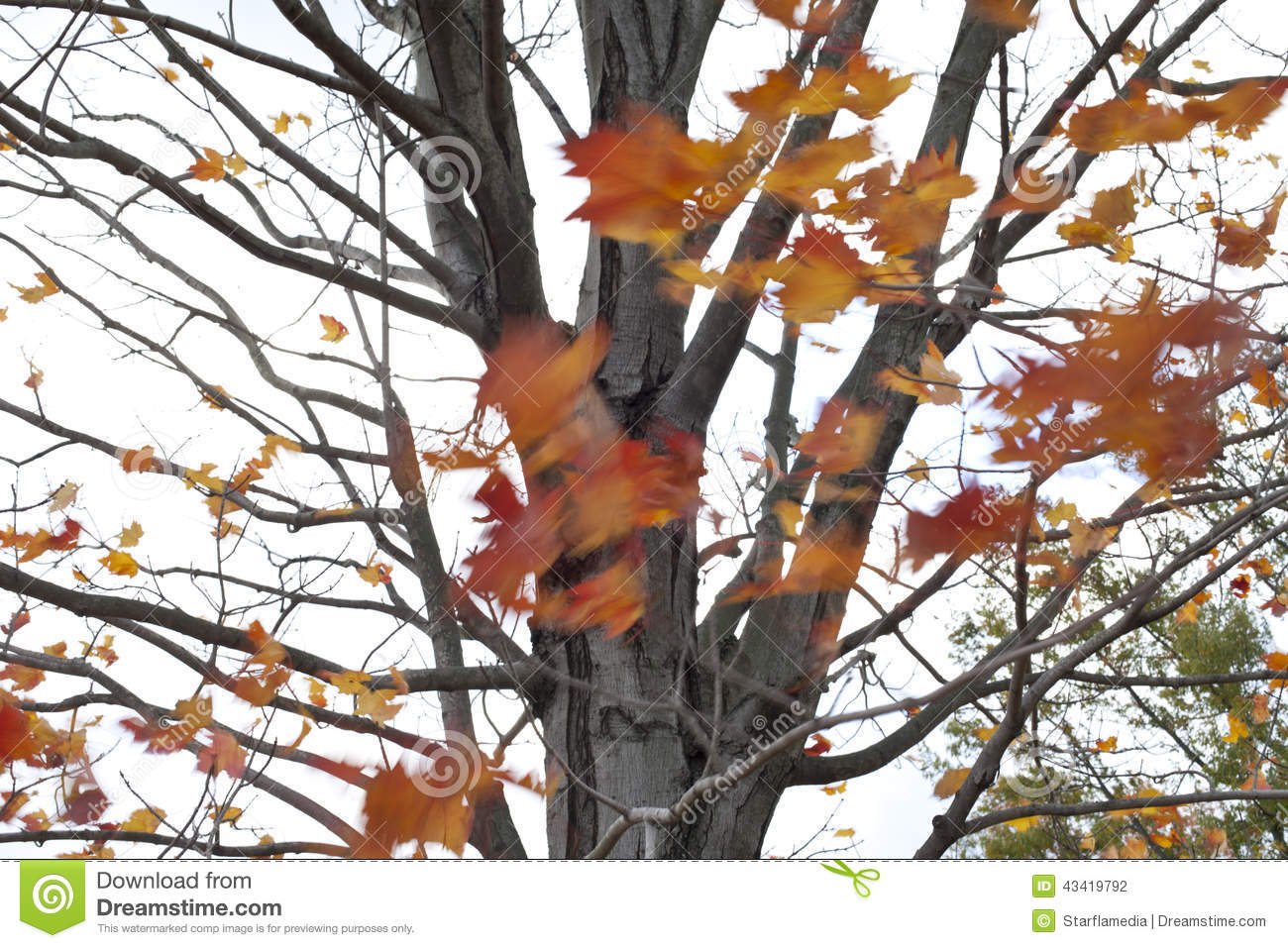 Leaves blowing off trees