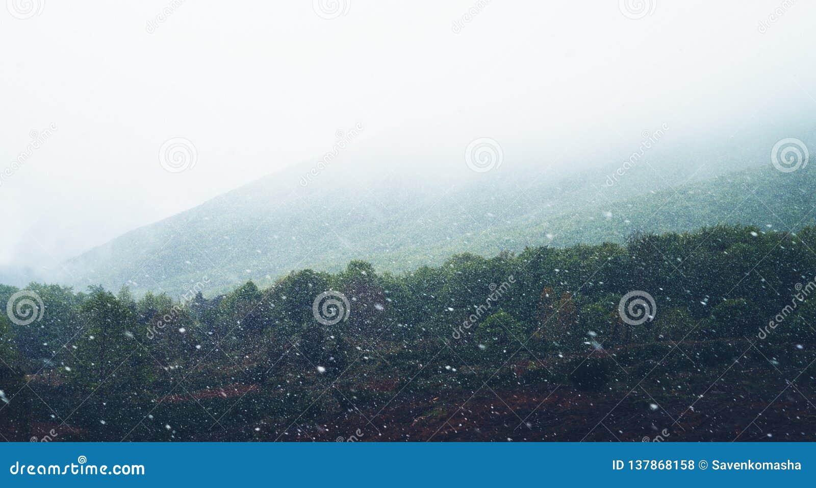 Falla som är insnöat bergen, väg i skogen med snöflingor, vinternatur, feriehelg i naturen, grönt träd med whit