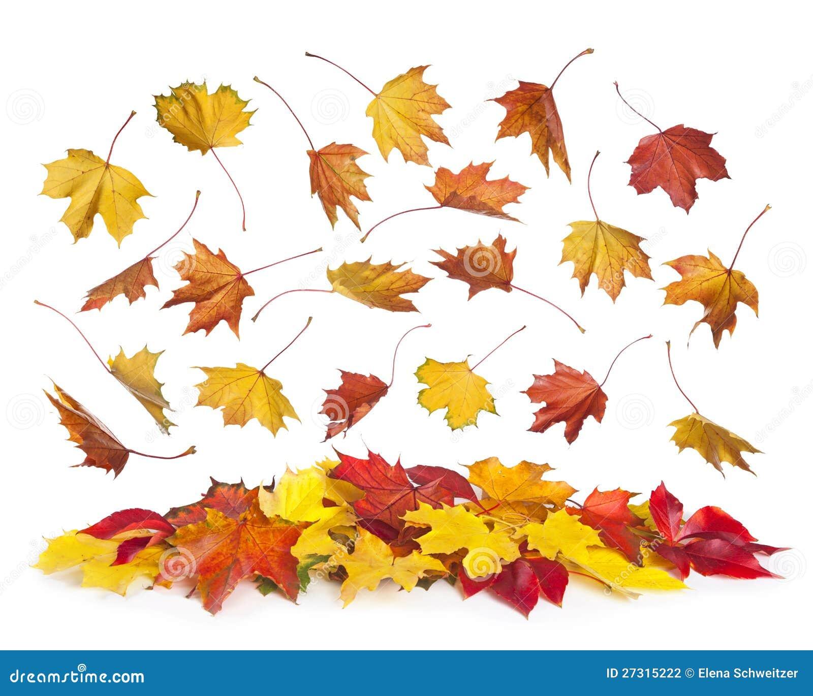 Fallande leaves för höst