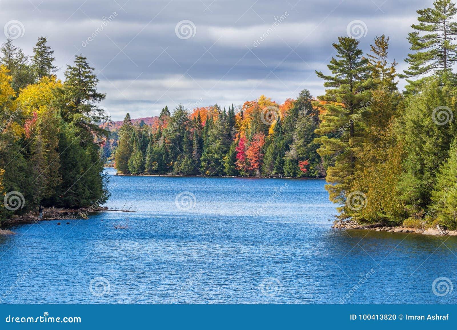 Fallbäume mit See