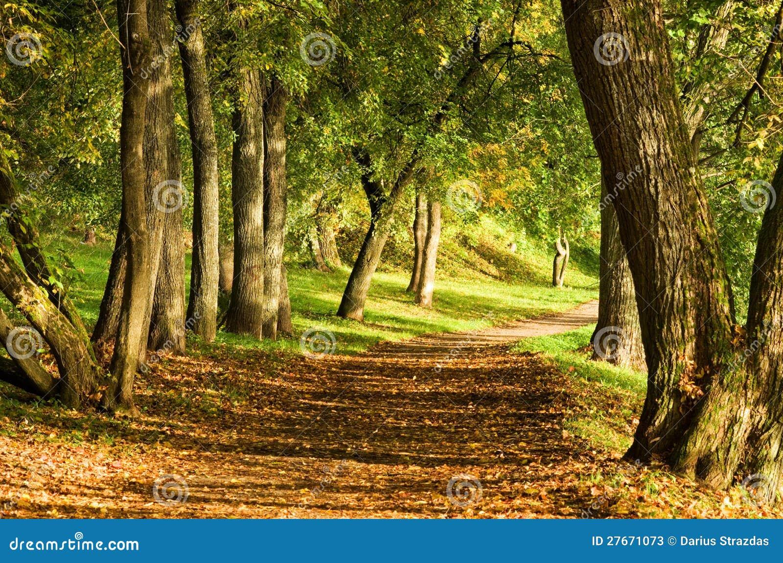 Fallbana i skog