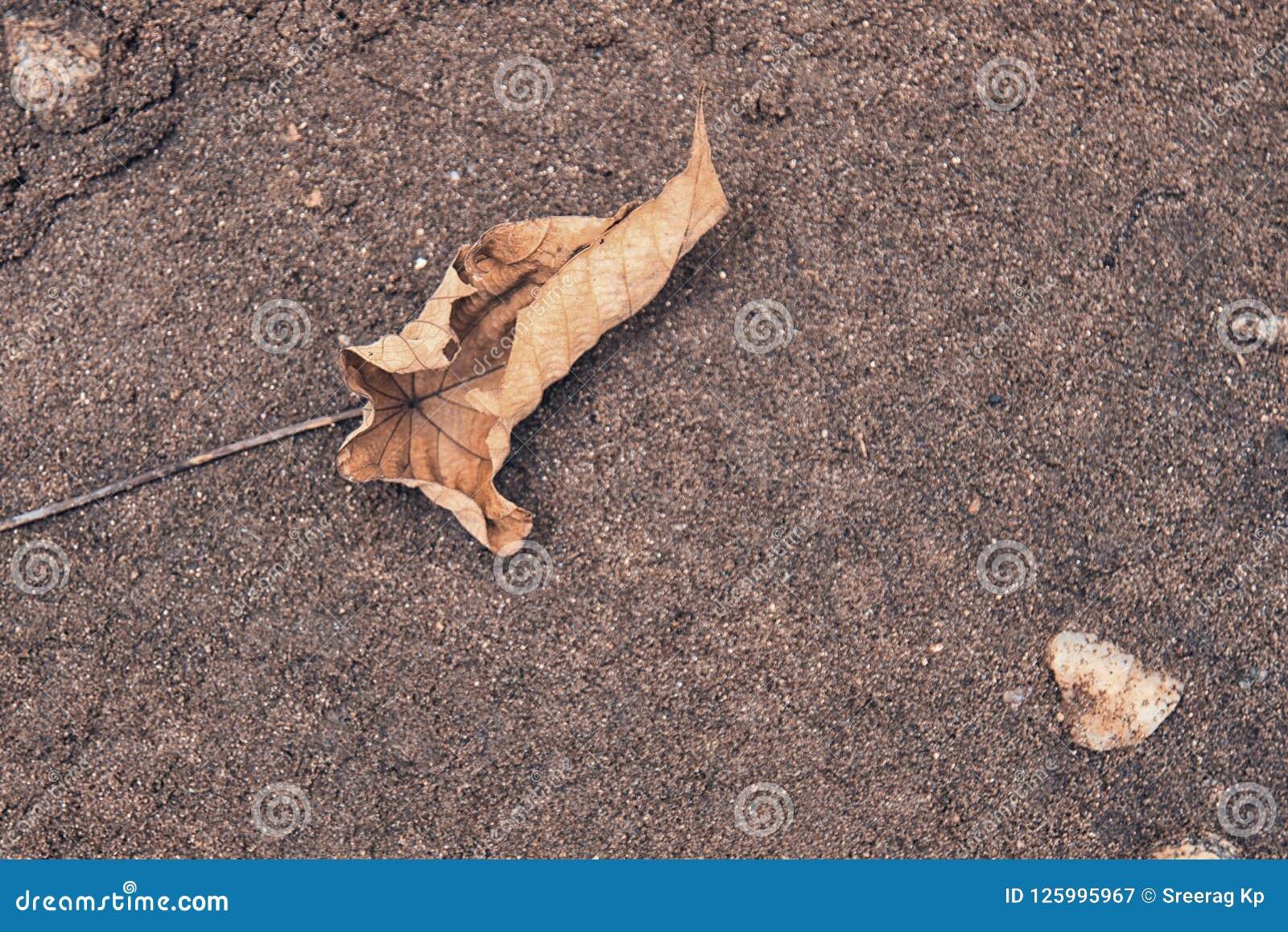 Fallblatt im Sand