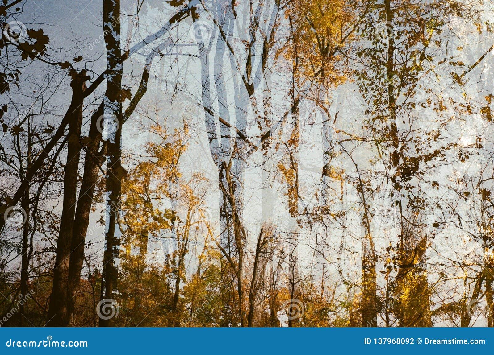 Fallen låter vara naturlig textur vibrerande