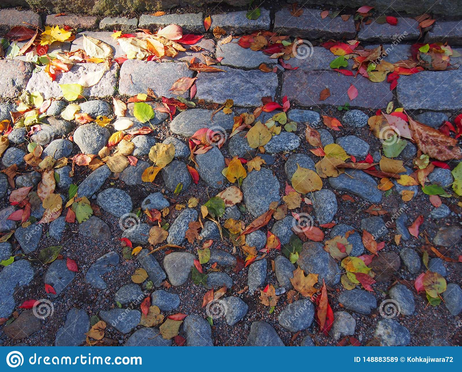 Autumn leaves on the pavement, Suomelinna Finland