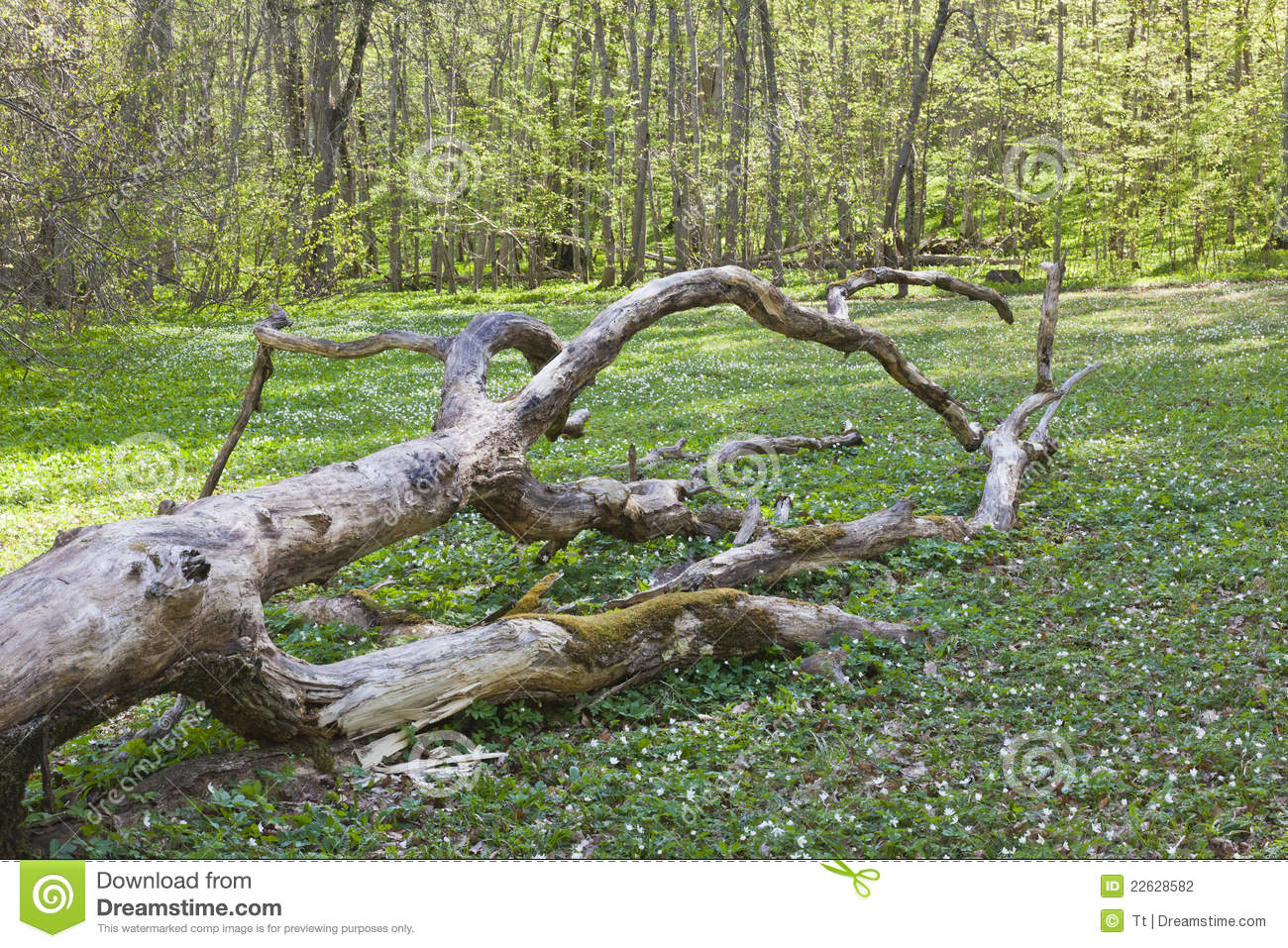 fallen log in meadow royalty free stock photography tree stump clip art png tree stump clip art pic
