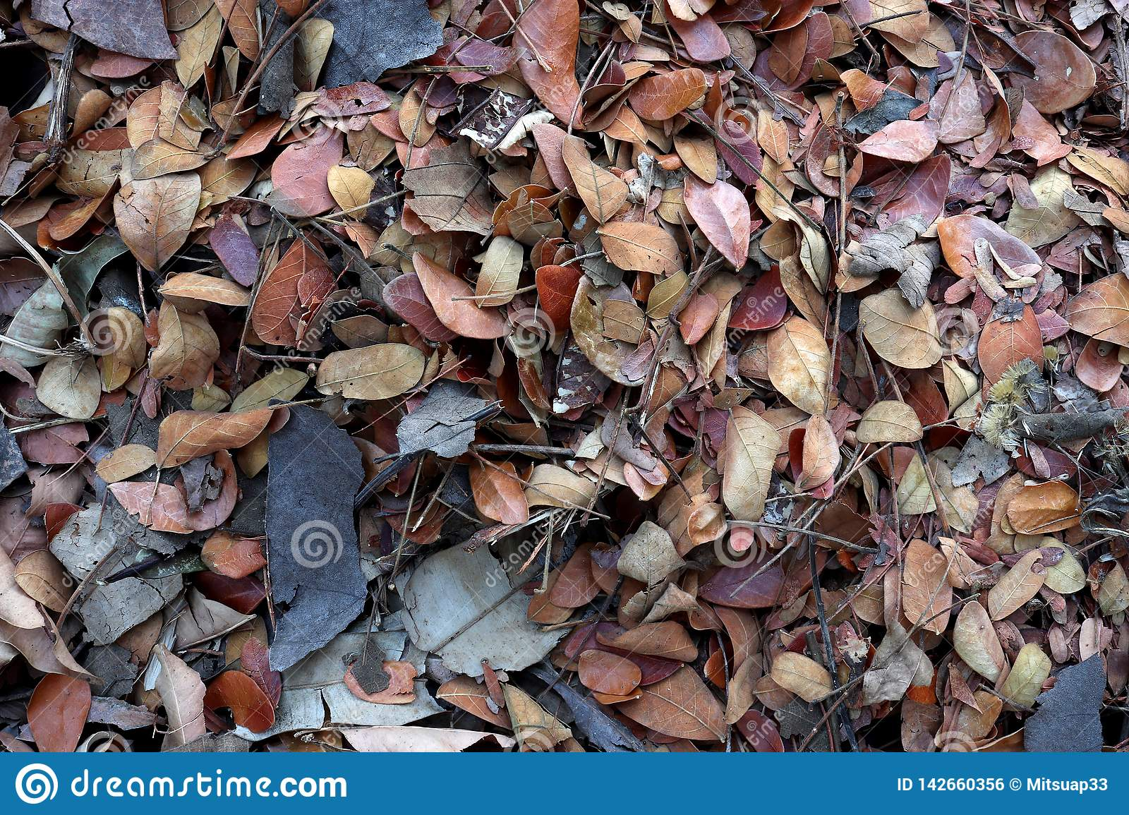 Fallen teak leaf on ground, Composting fall leaves, Biomass and mulch, organic material