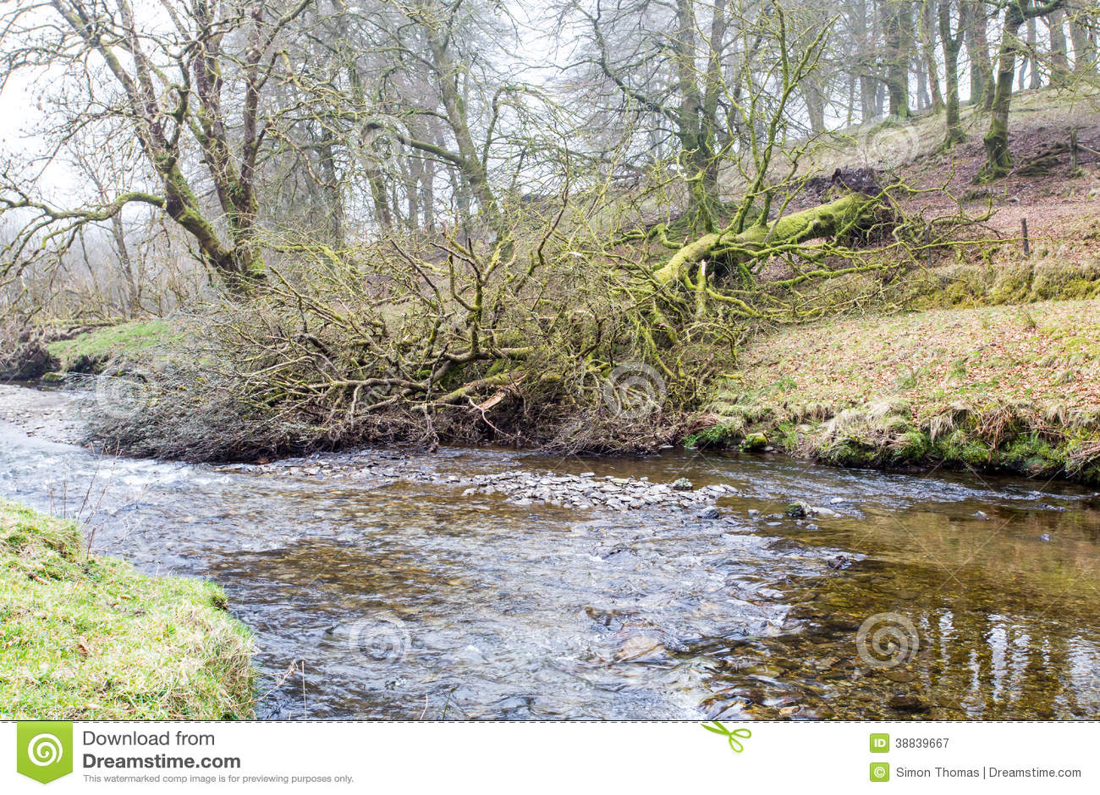 Download Fallen Tree stock image. Image of mist, water, tree, fallen - 38839667