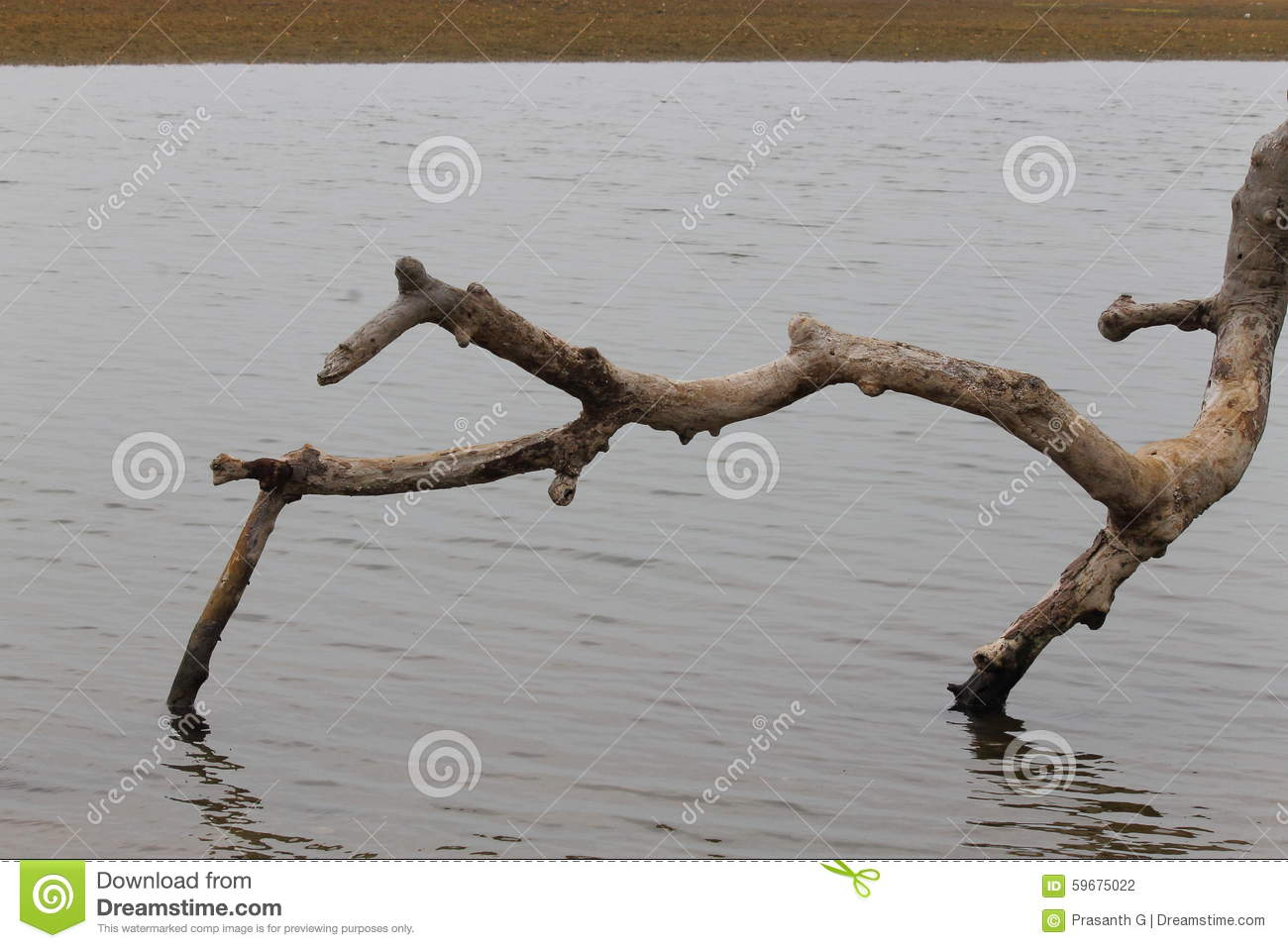 Fallen Tree Branch Stock Photo - Image: 59675022