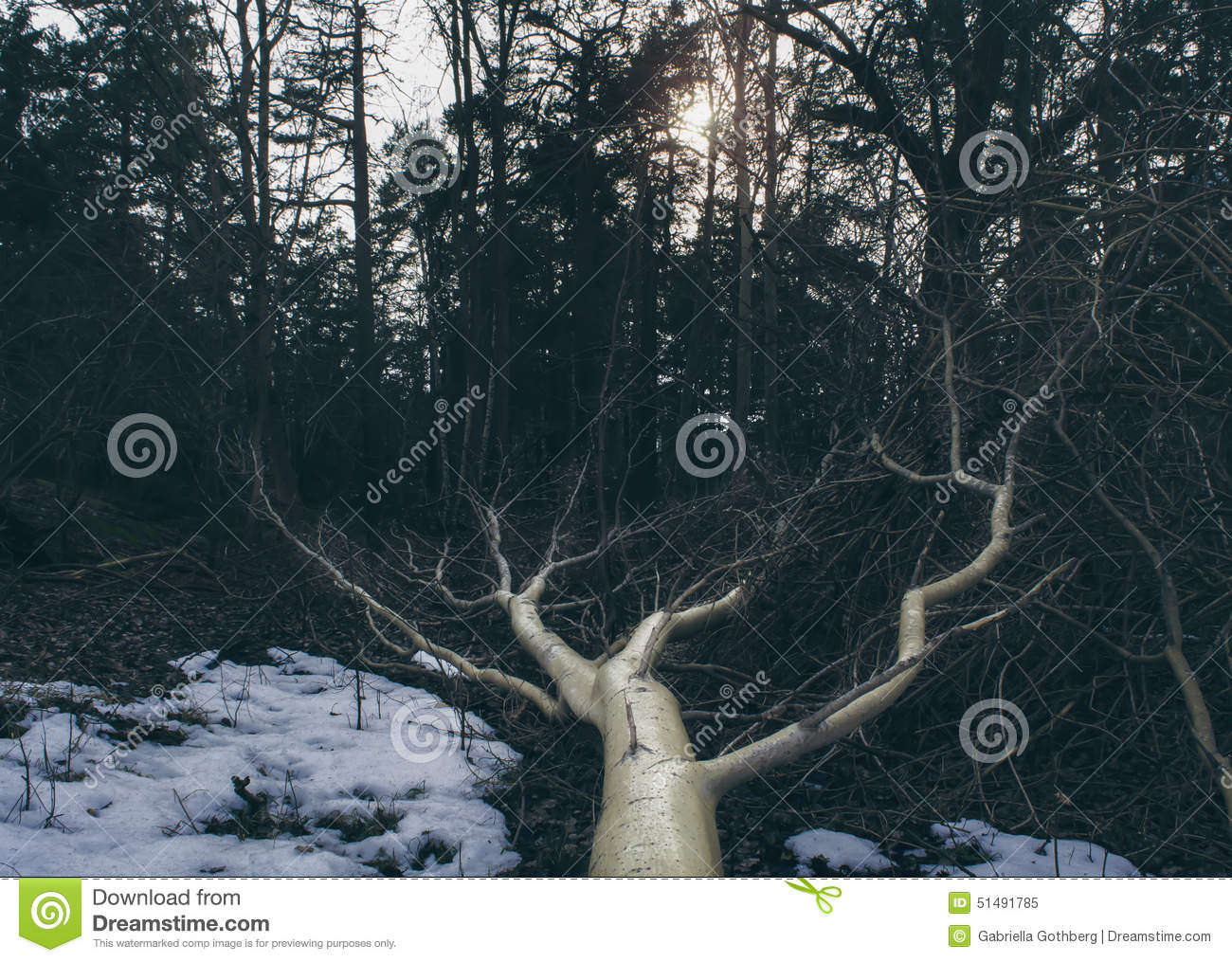 Fallen tree in mysterious forest