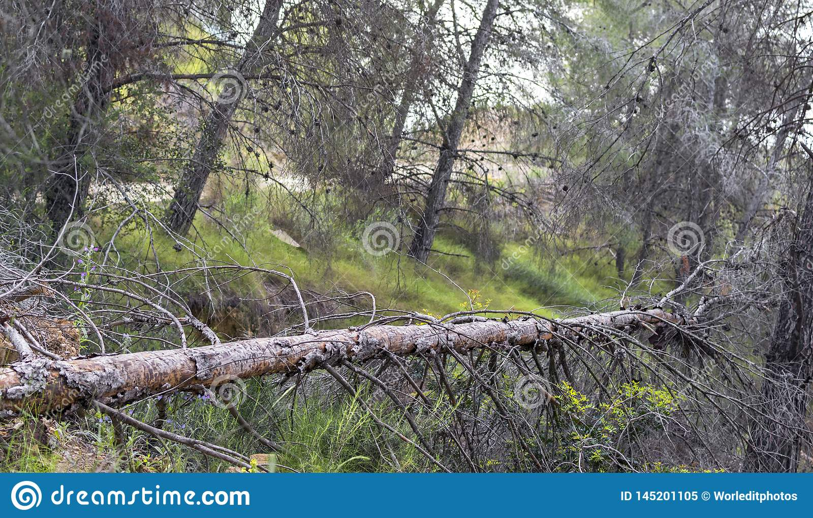 A fallen tree in a spanish forest on a Natural Park in Murcia