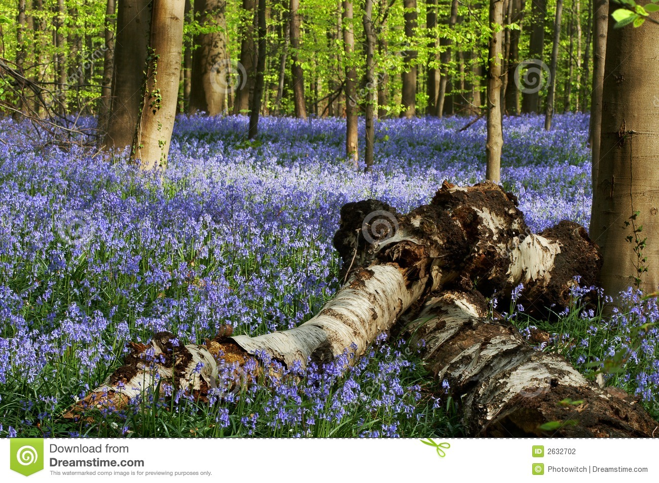 Fallen Trees Stock Photography Image 2632702