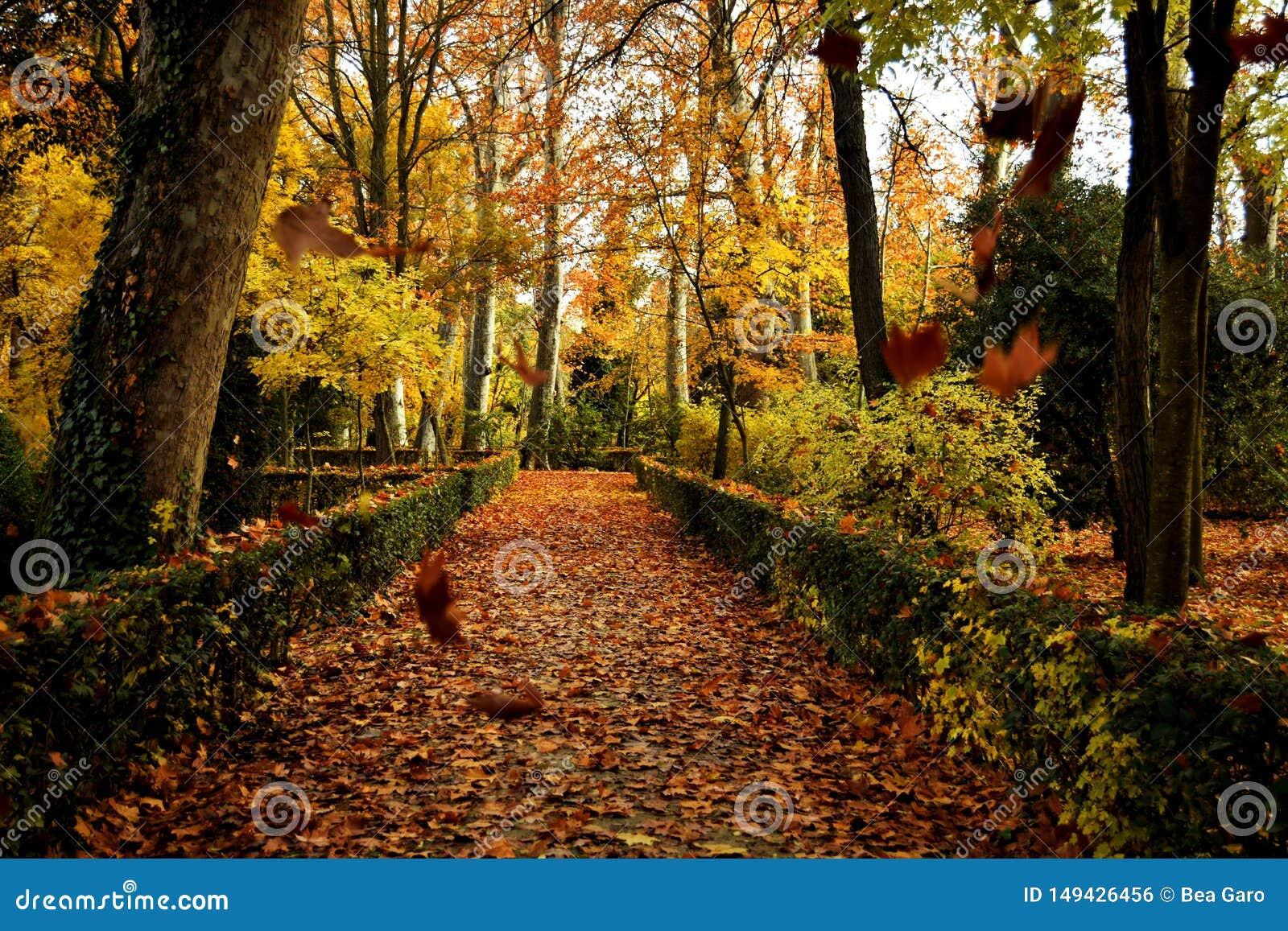 Fallende Bl?tter im Herbst