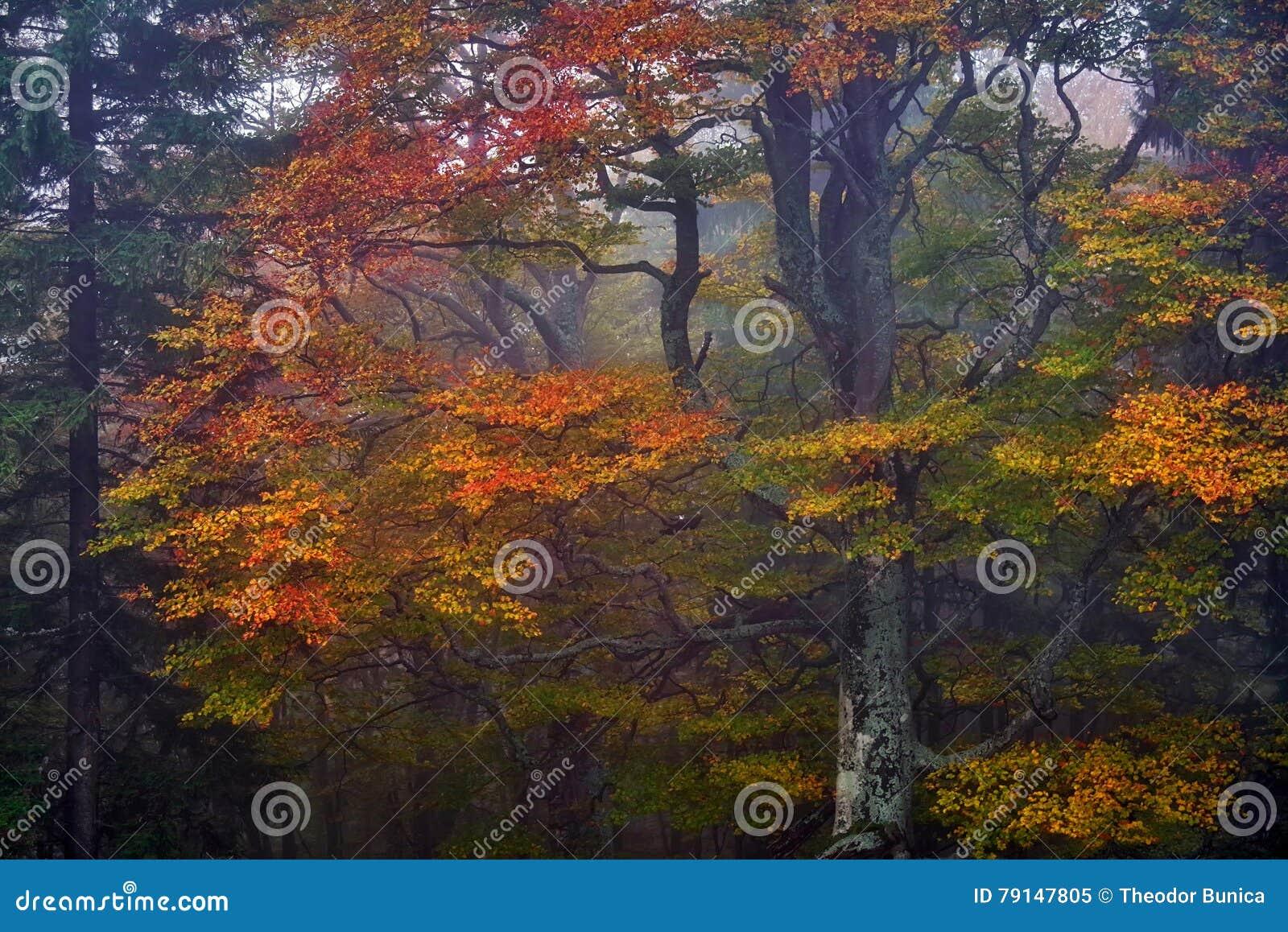 Faller ljusa färger för abstrakt höst halvt för trevlig modell för leaves rött