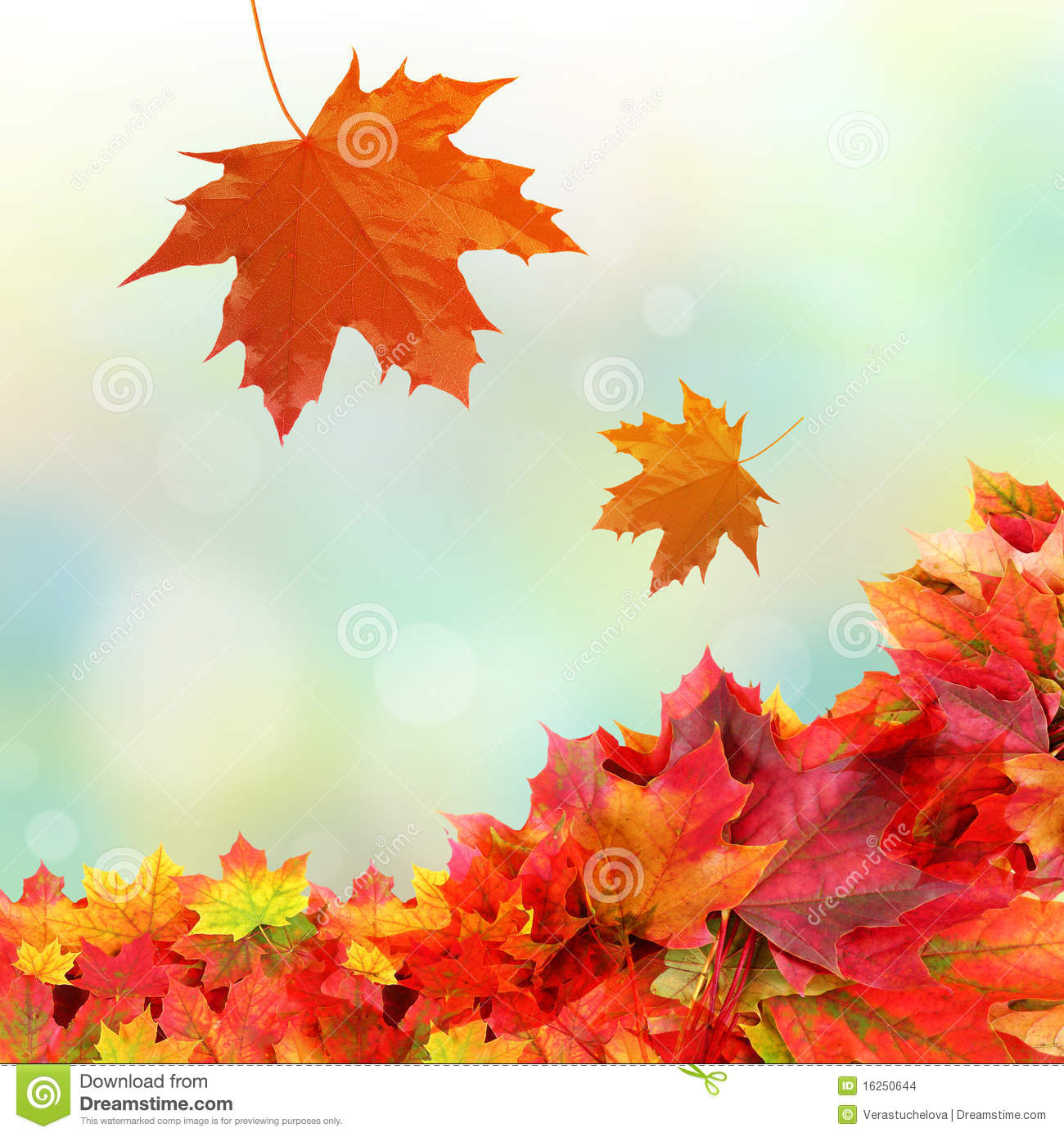 Falling fall leaves stock photo. Image of frame, bright - 16250644
