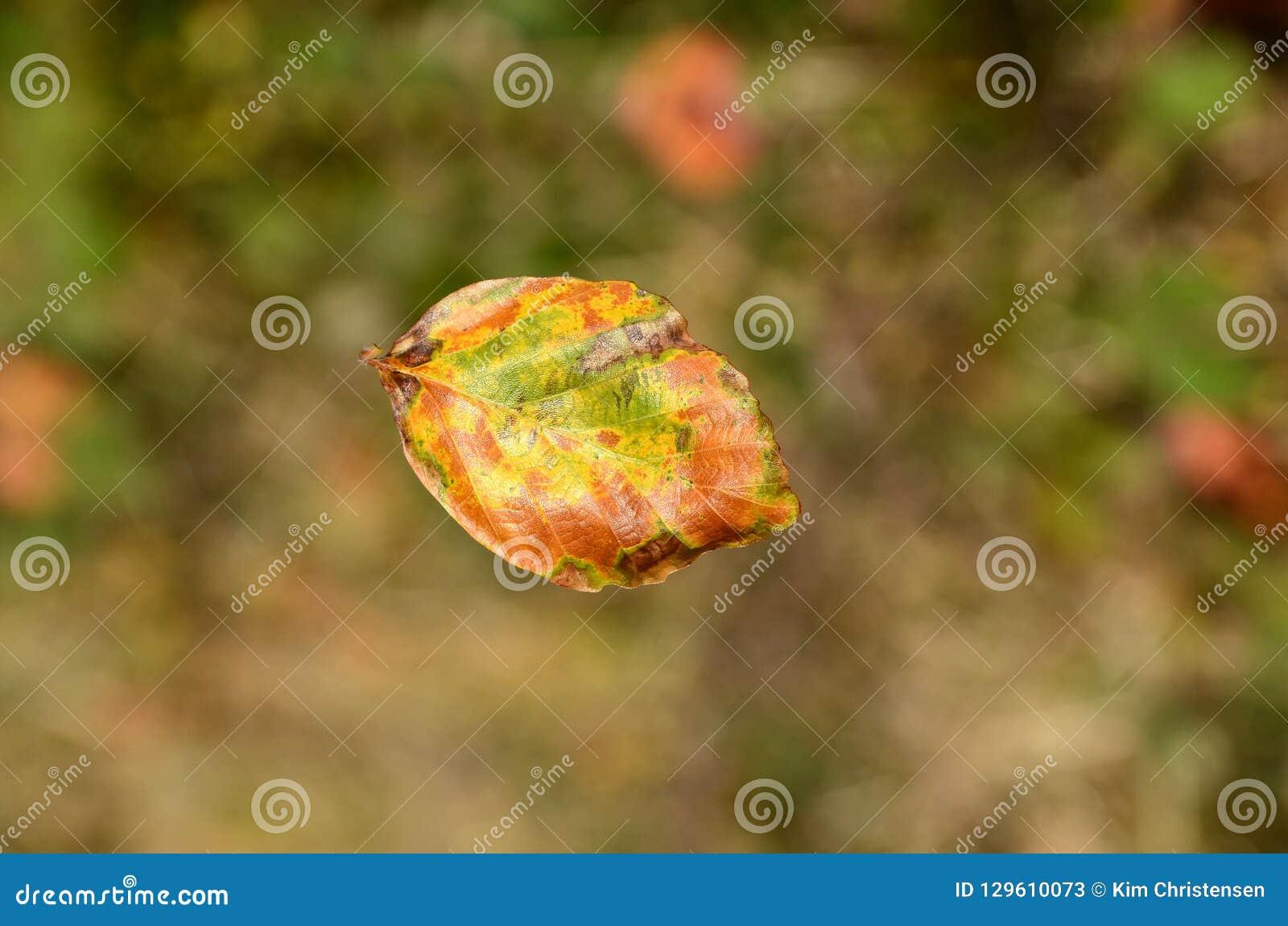 Falling leaf in midair