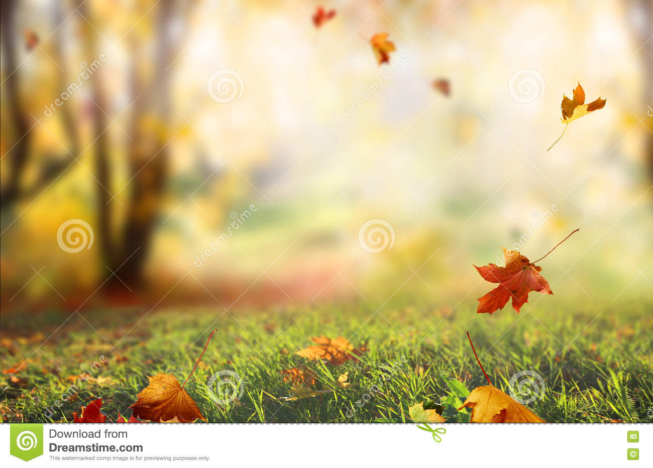 falling leaves natural background stock photo image of abstract  blur 77752522 fall leaves border clip art free fall leaves border clip art black and white
