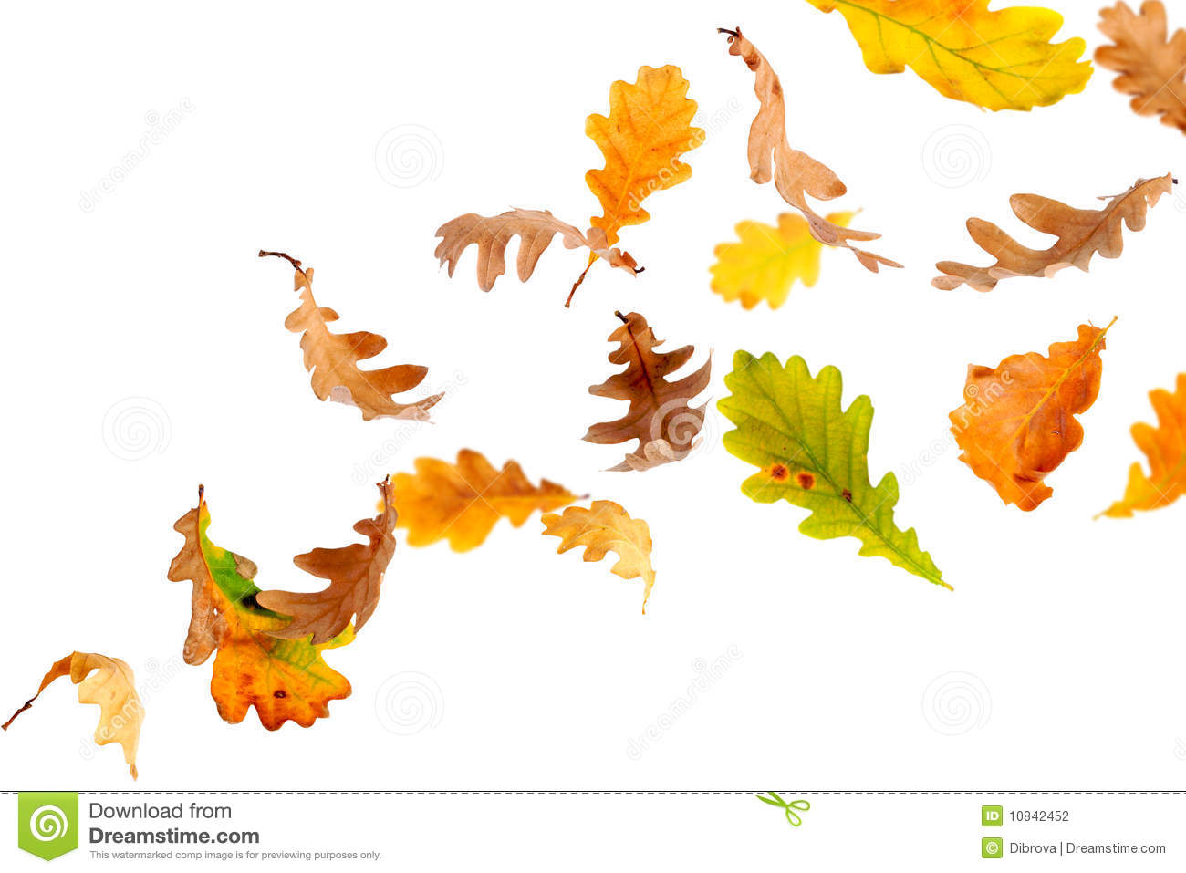 Falling Oak Leaves Stock Photography - Image: 10842452