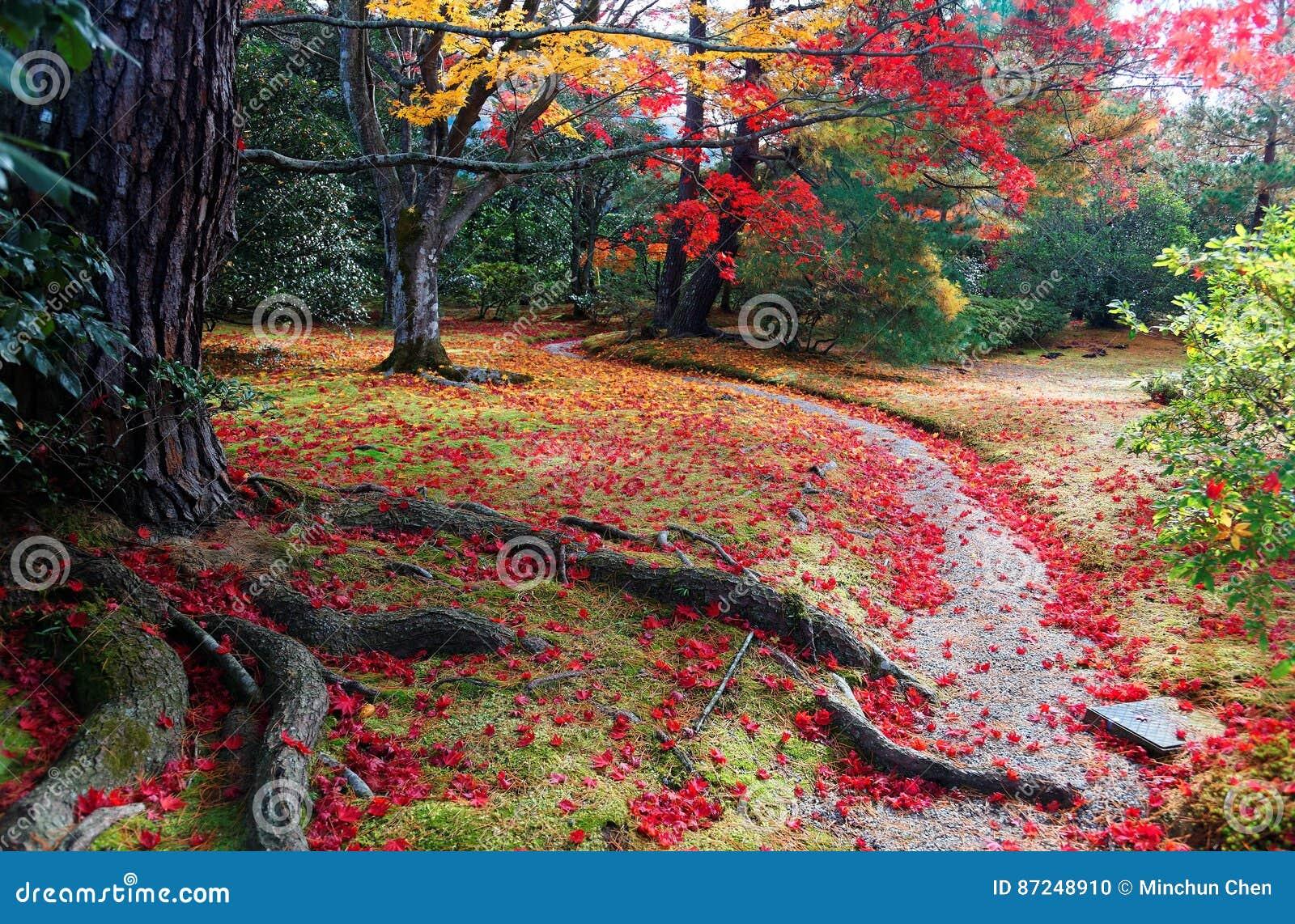 Falllandschaft des bunten Laubs der japanischen Ahornbäume und der gefallenen Blätter auf einer Spur im Garten Kaiserlandhauses S