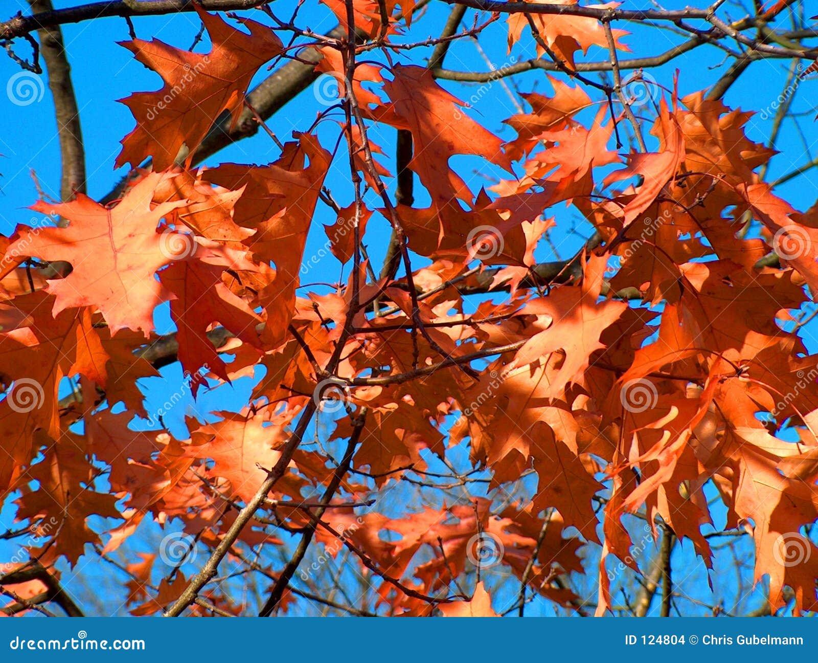 Falls liście brown