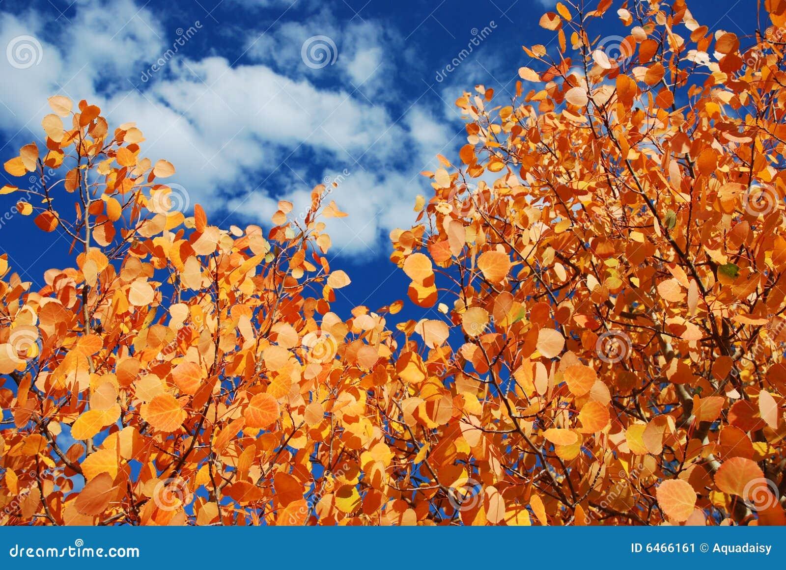 Falls osikowi liście