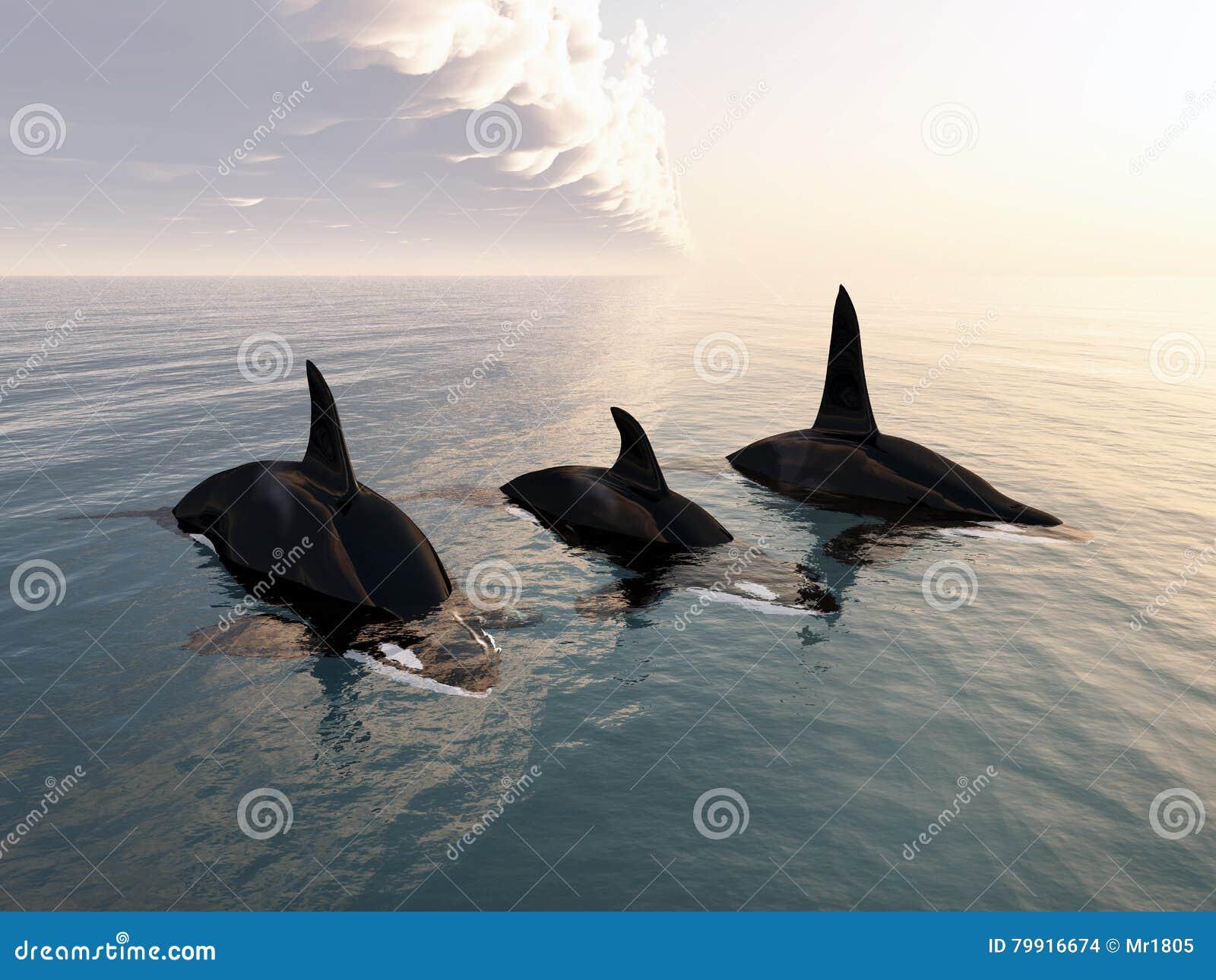 Família da baleia de assassino