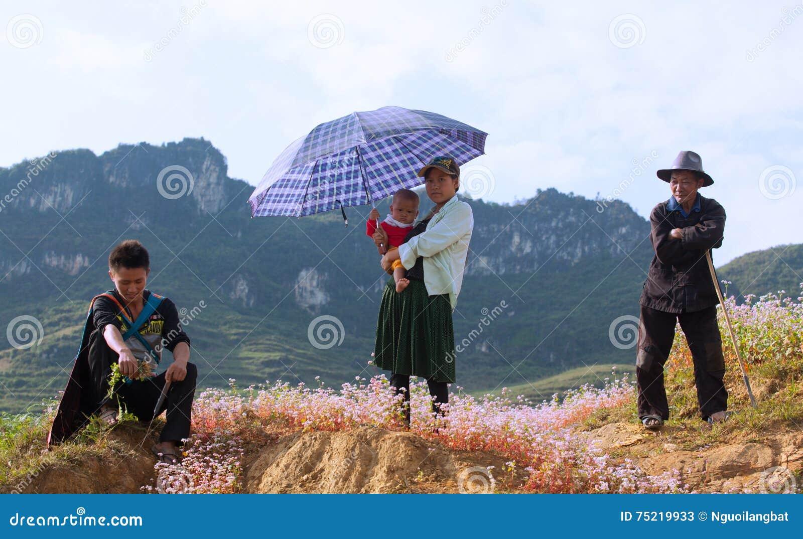 Família da minoria de Hmong do vietnamita que toma um resto na flor roxa