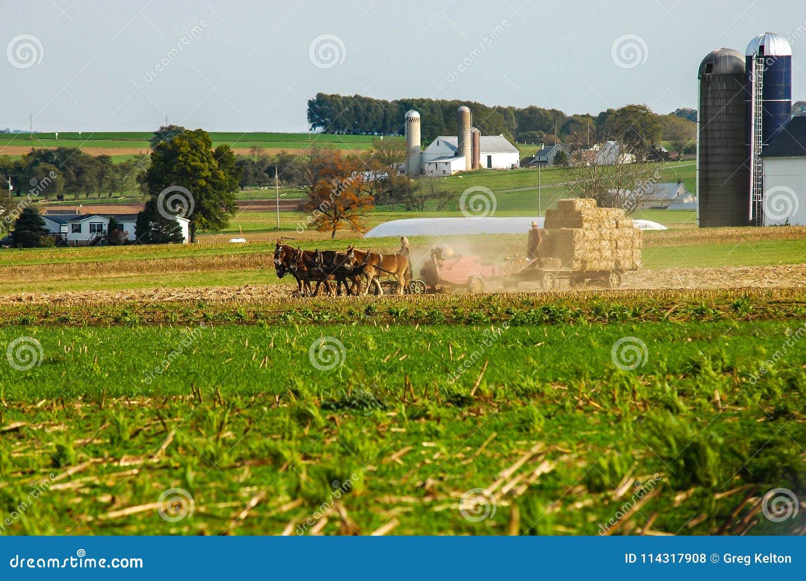 Família de Amish que colhe os campos em Autumn Day pinta 5