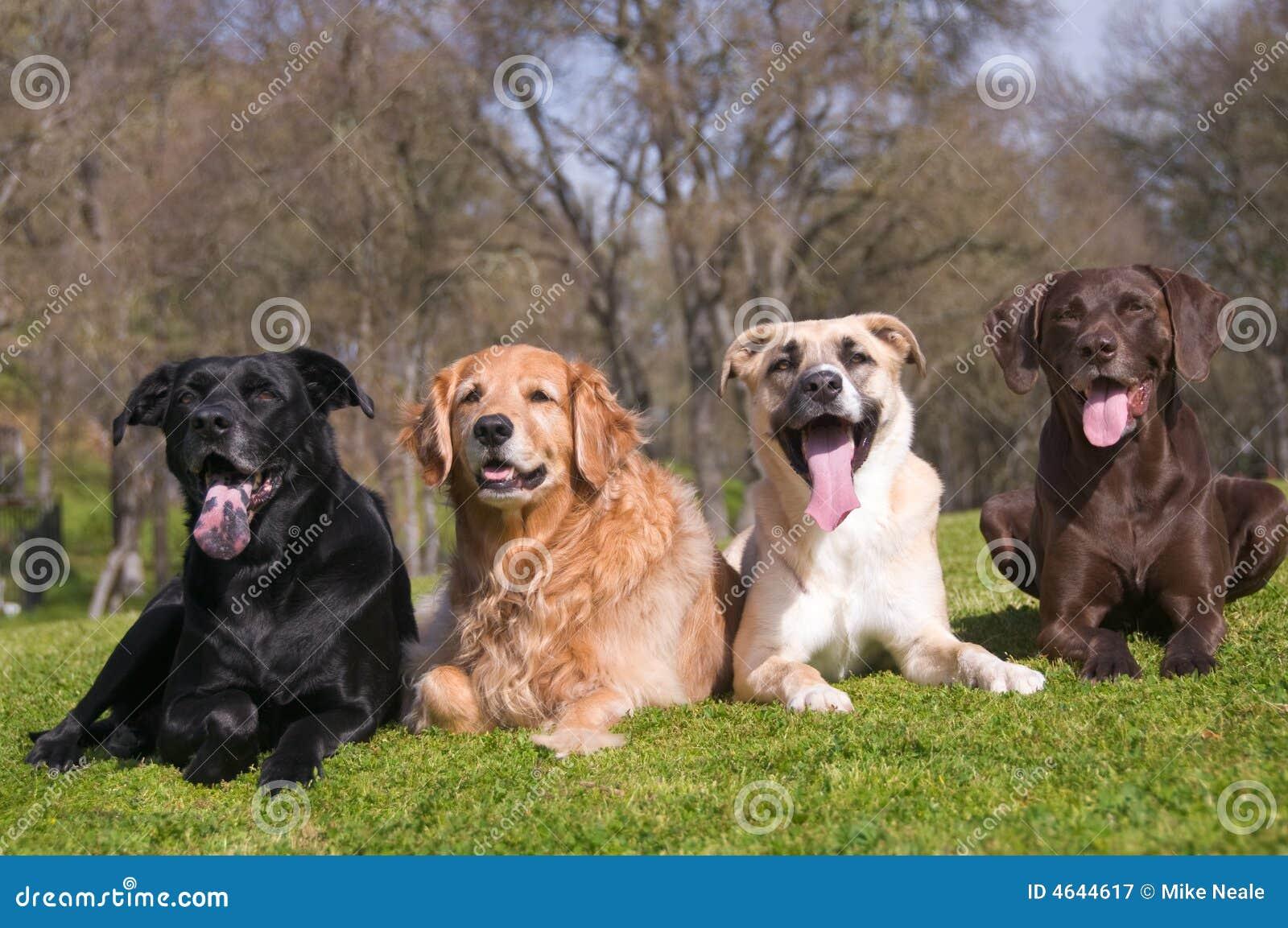 Família de cão da diversidade