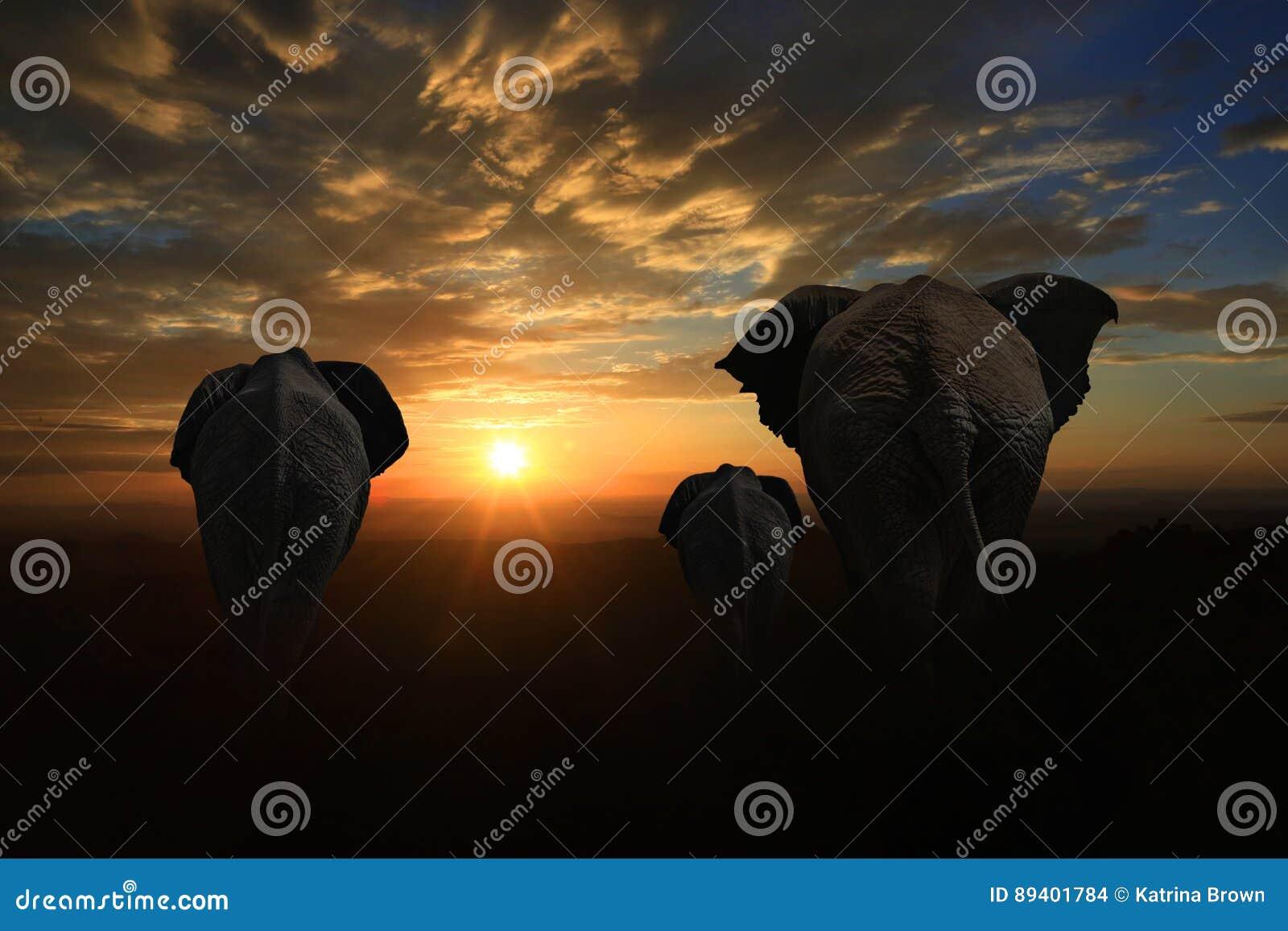 Família de 3 elefantes que andam no por do sol