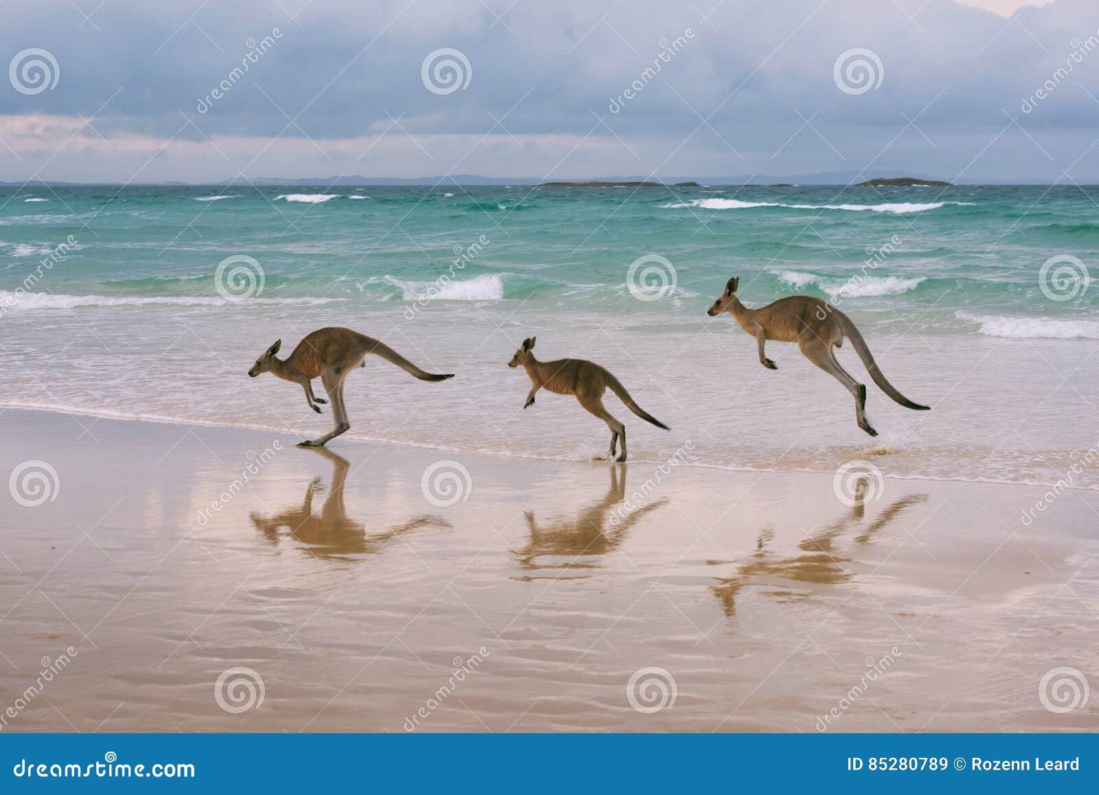 Família do canguru na praia