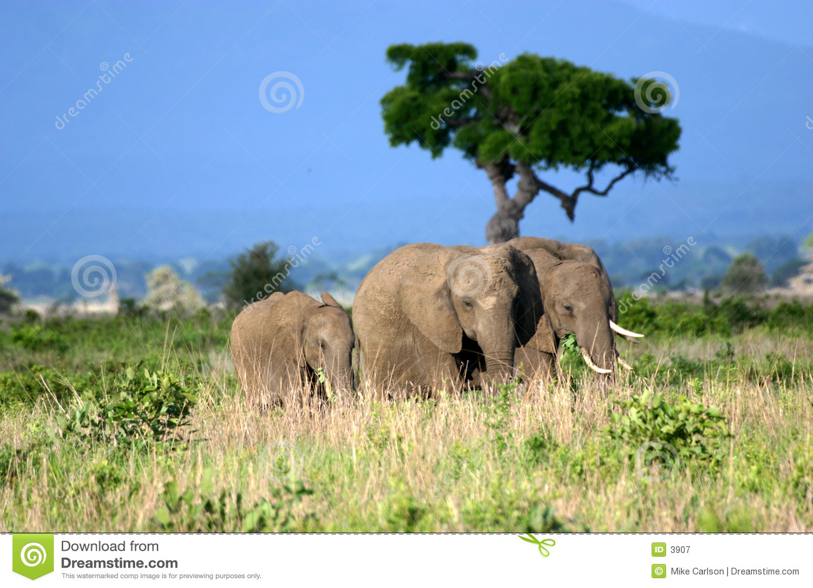 Família do elefante nas planícies africanas